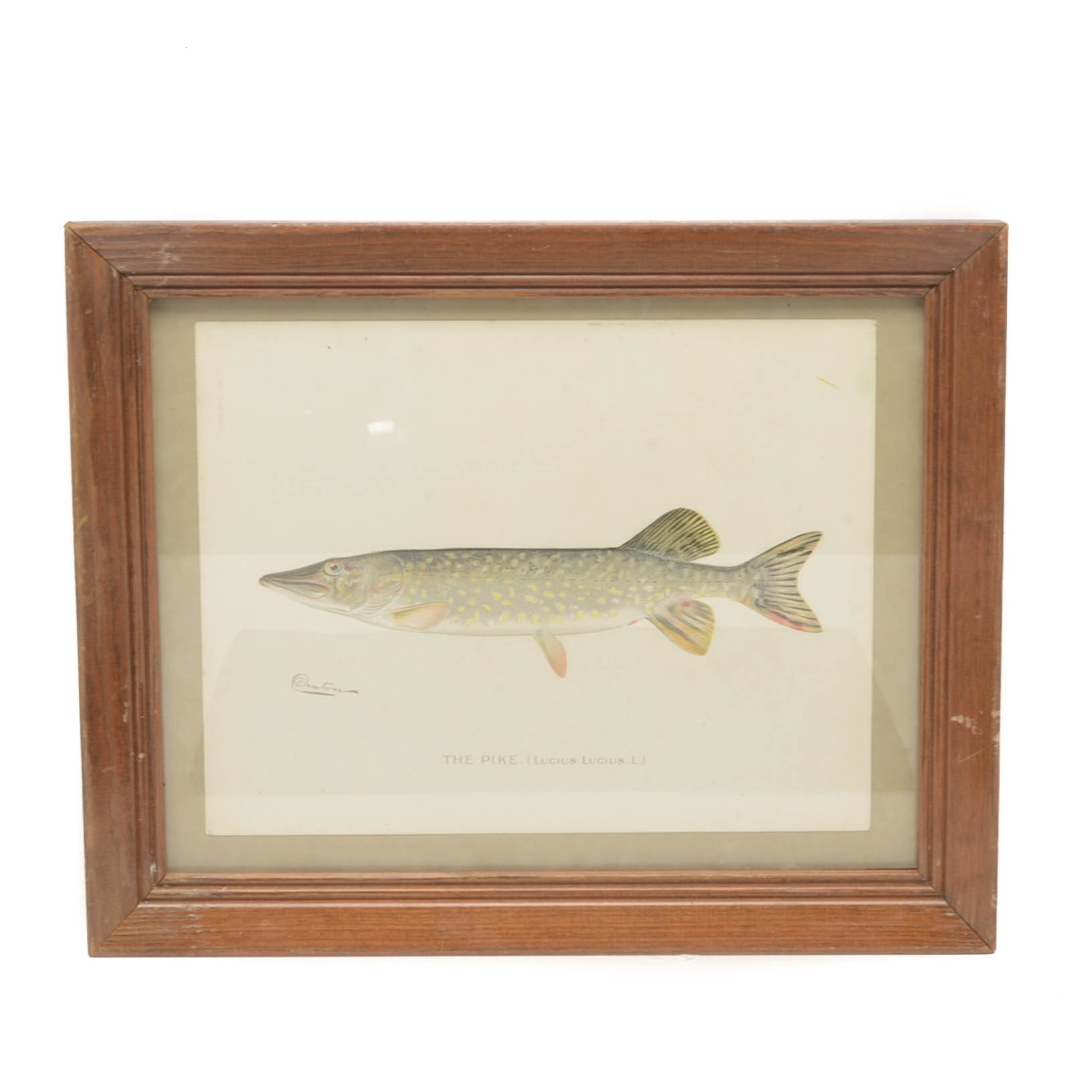 "Sherman Foote Denton Ichthyological Chromolithograph ""The Pike"""