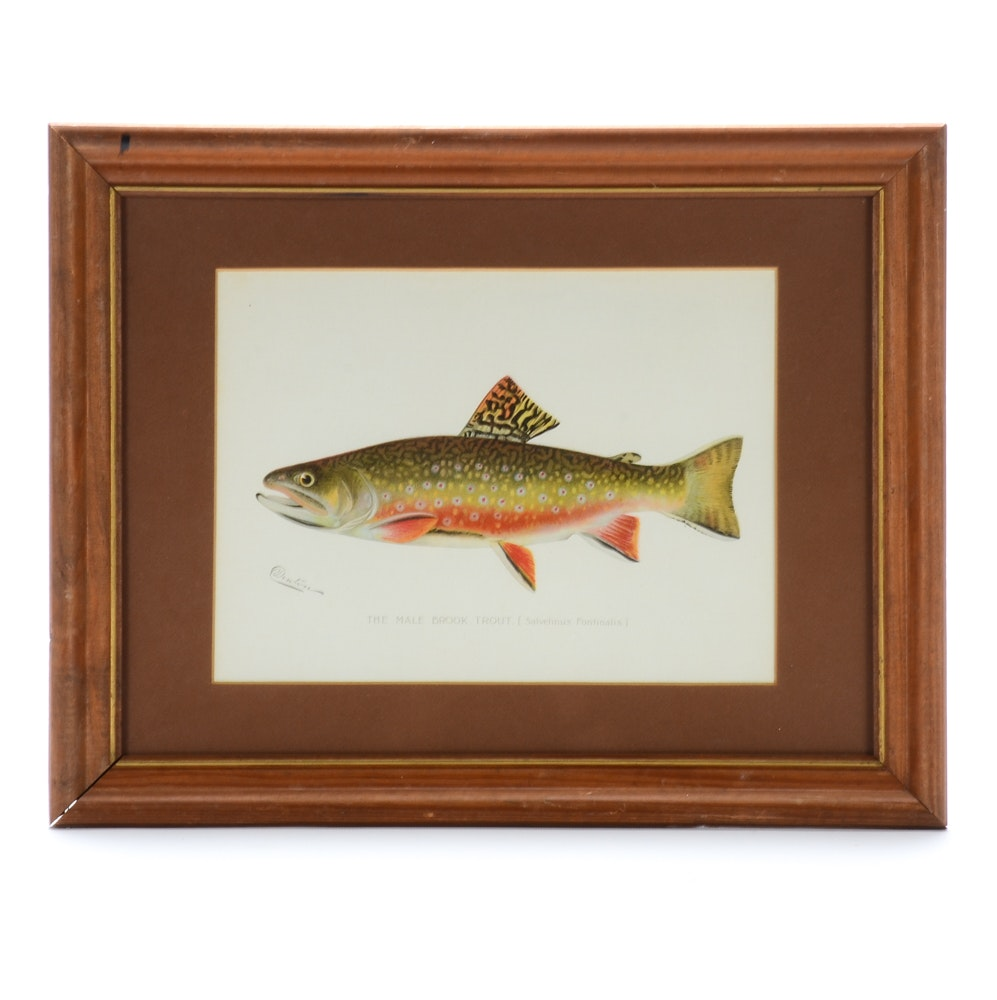 "Sherman Foote Denton Ichthyological Chromolithograph ""The Male Brook Trout"""