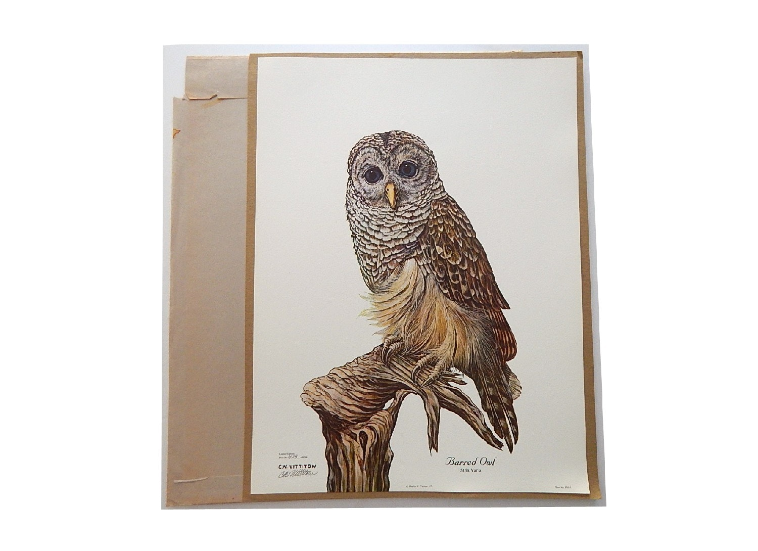 "Unframed 1979 C.W. Vittitow ""Barred Owl"" Signed Limited Offset Lithograph Print"