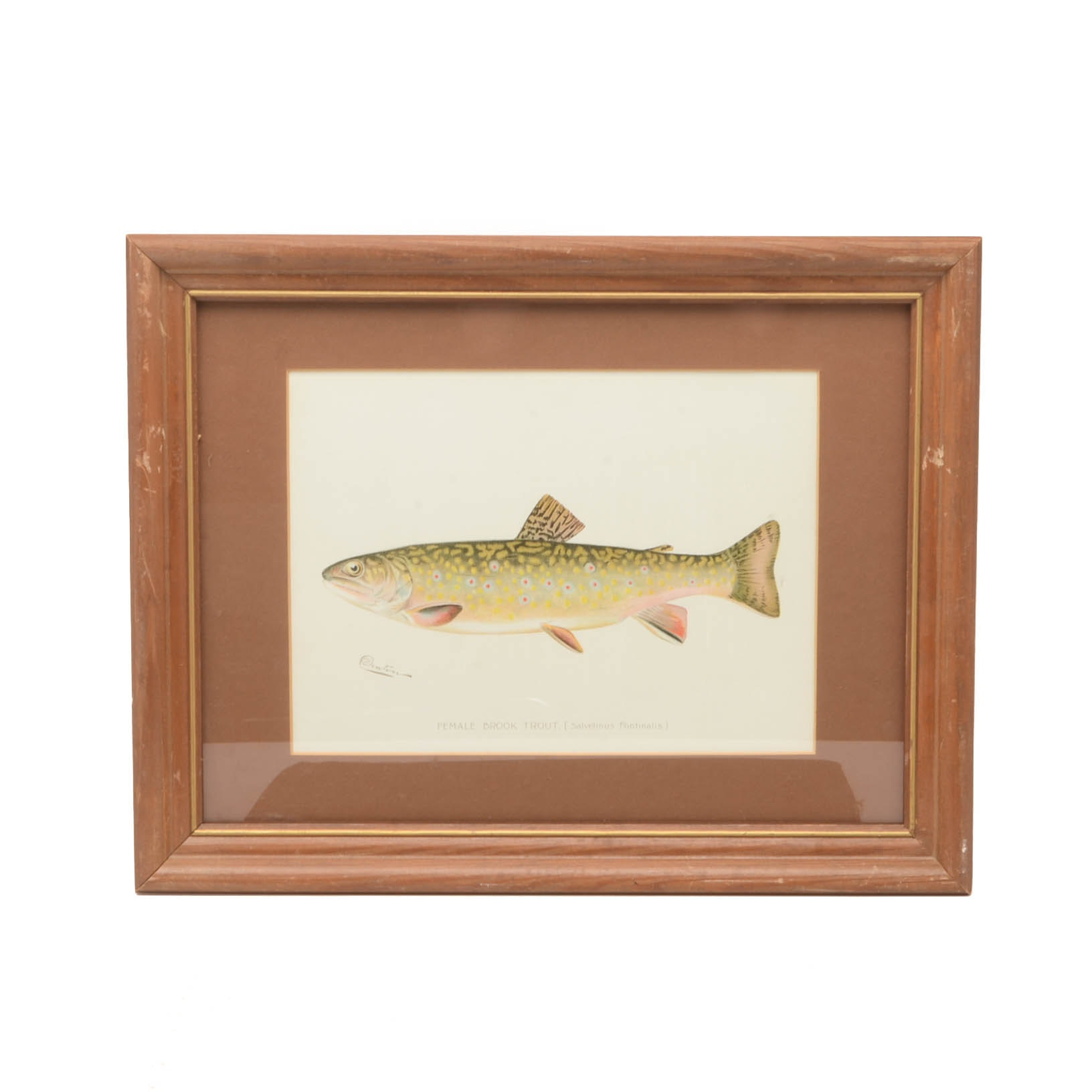 "Sherman Foote Denton Ichthyological Chromolithograph ""Female Brook Trout"""