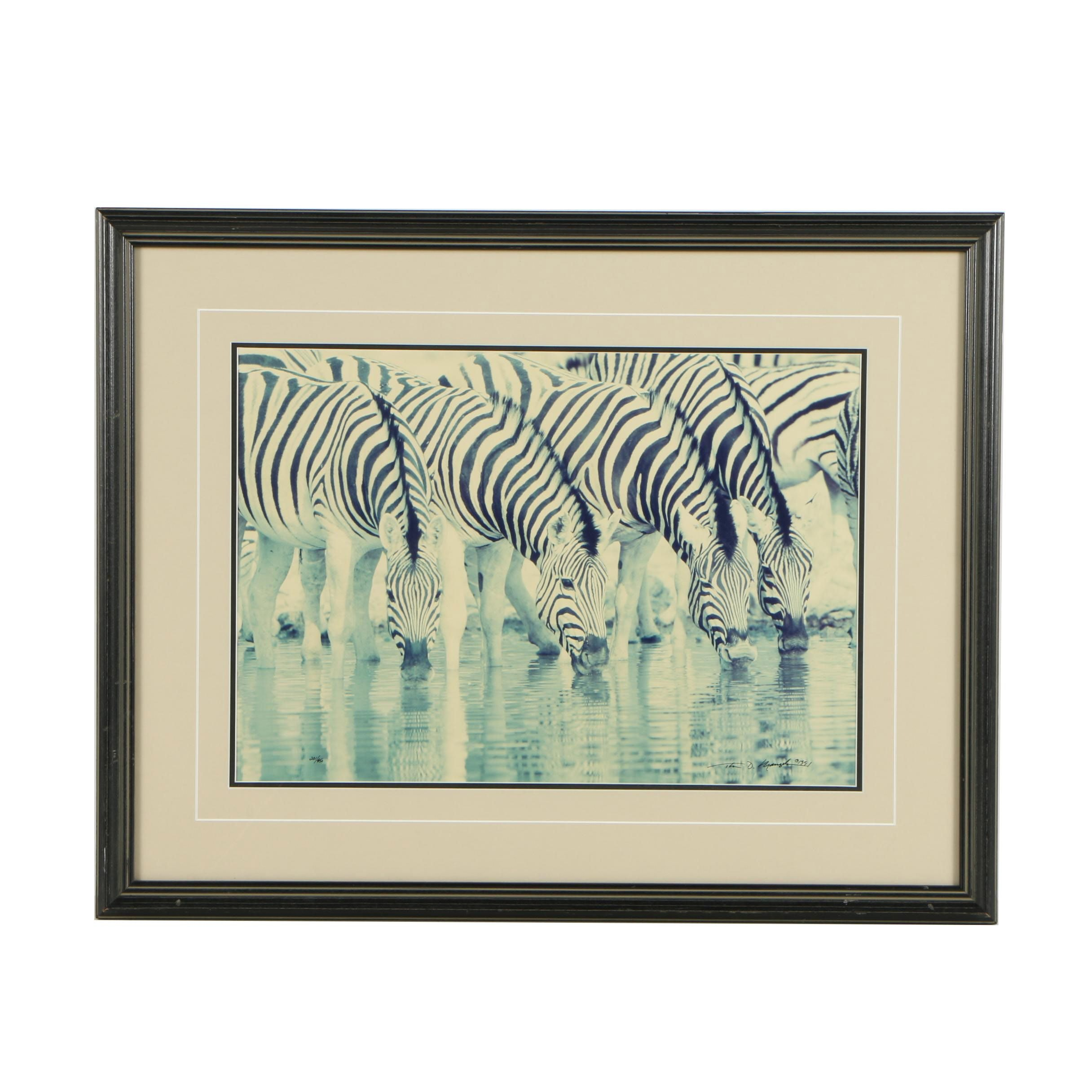 "Thomas D. Mangelson Color Photograph ""The Dry Season - Zebras"""