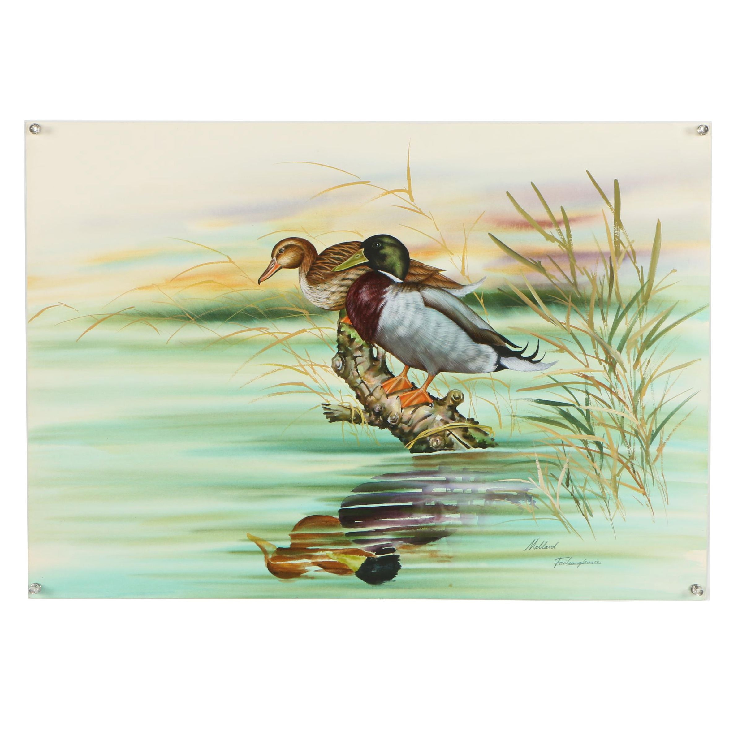 "Vintage Watercolor and Gouache Painting ""Mallard"""