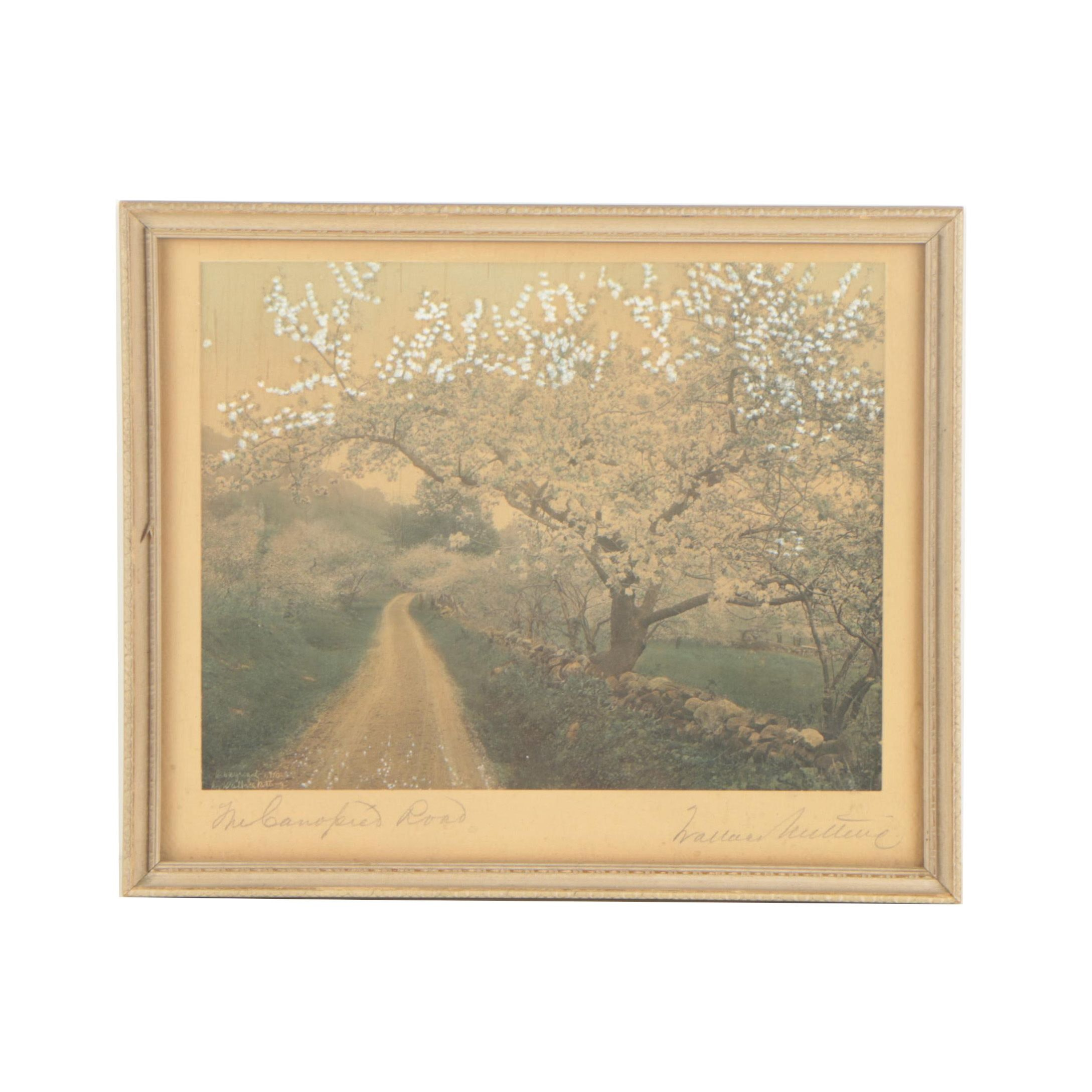 "Wallace Nutting 1910 Hand Colored Photograph ""A Canopied Road"""