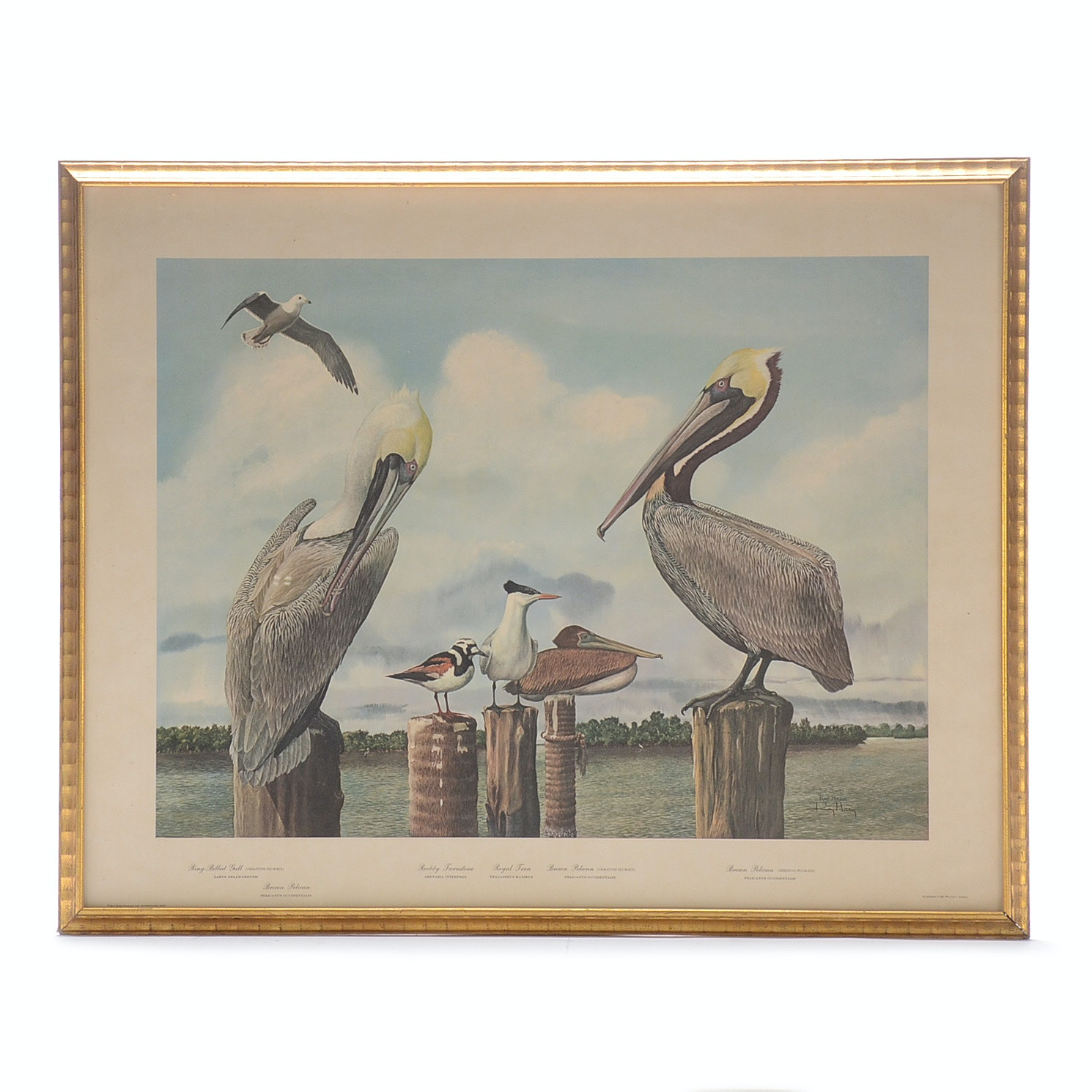 Ray Harm Signed 1967 Offset Lithograph Print on Paper of Waterbirds