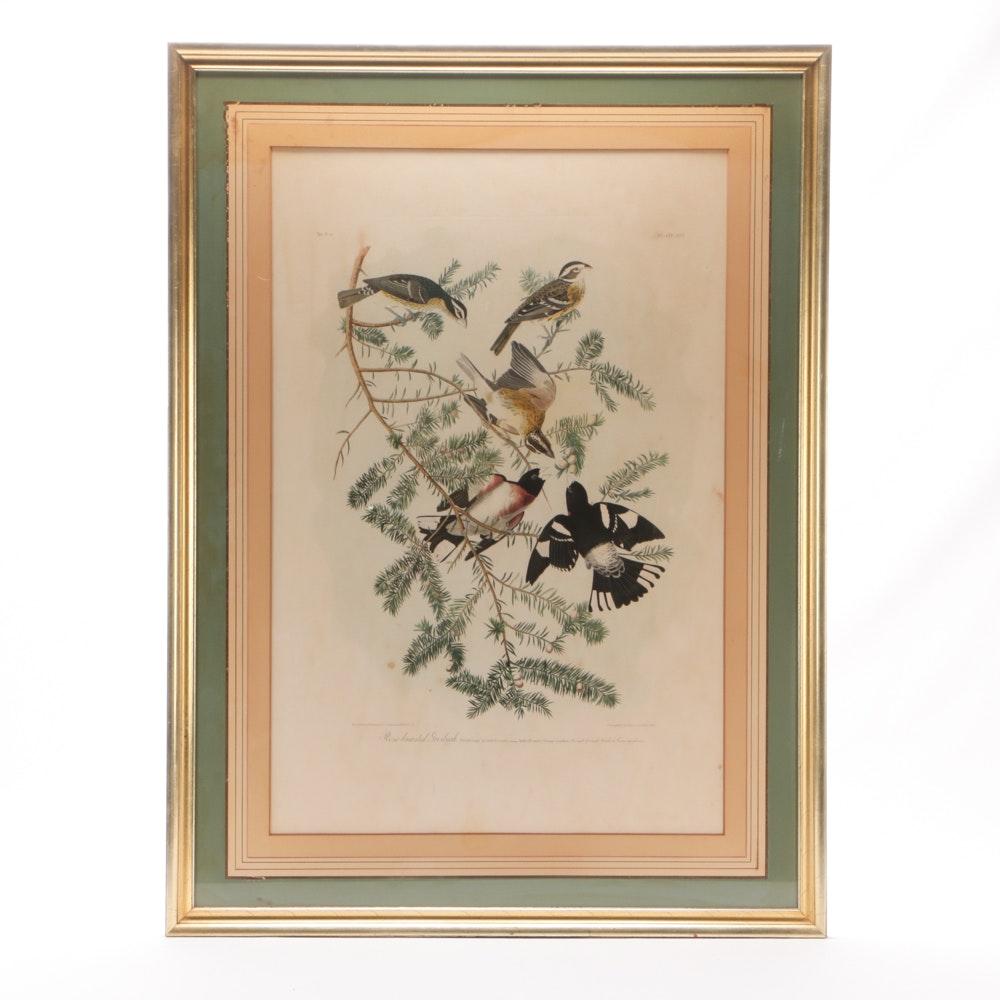 "Julius Bien Chromolithograph after John James Audubon ""Rose-breasted Grosbeak"""