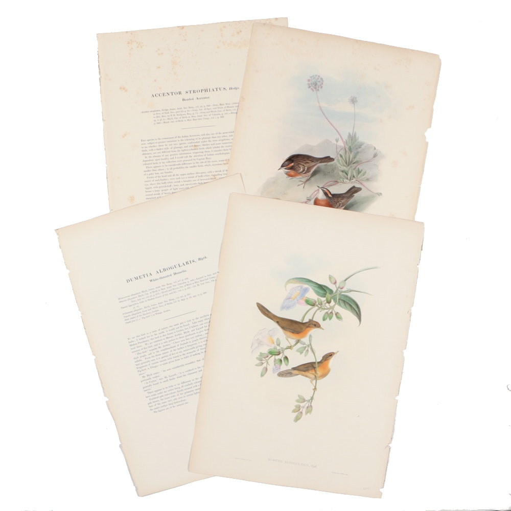 Two John Gould & HC Richter Hand-colored Ornithological Lithographs