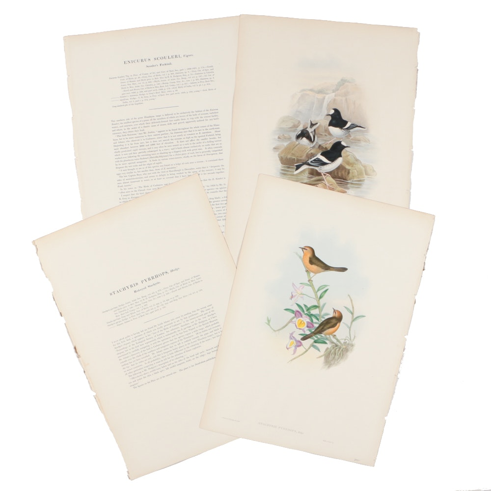 Two John Gould & H.C. Richter Hand-colored Ornithological Lithographs