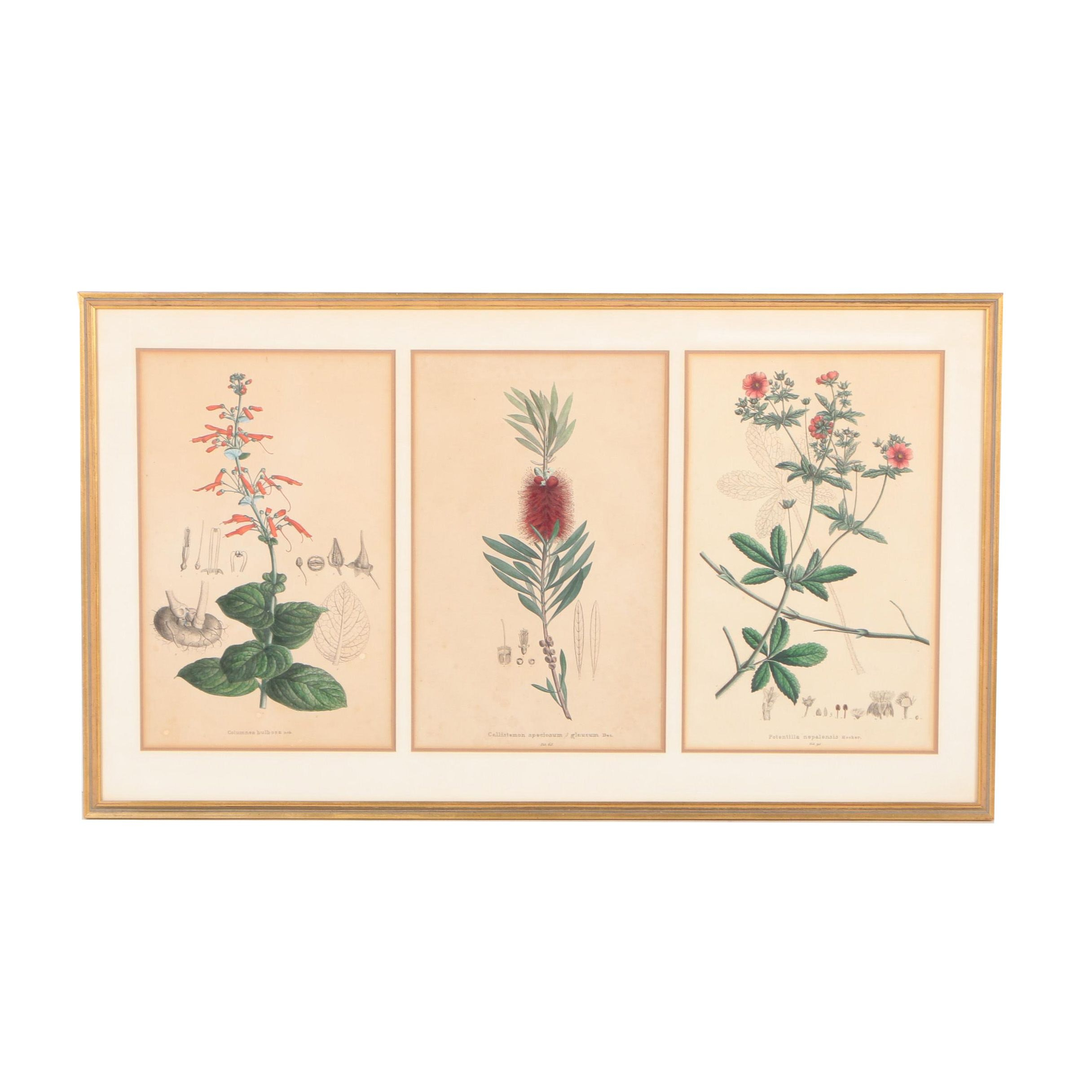 Hand-Colored Lithographs of Botanical Bookplates