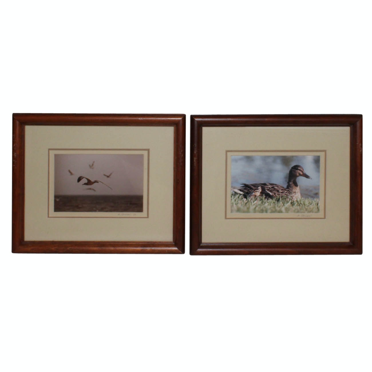 Two Framed M. Strobel Photographic Prints