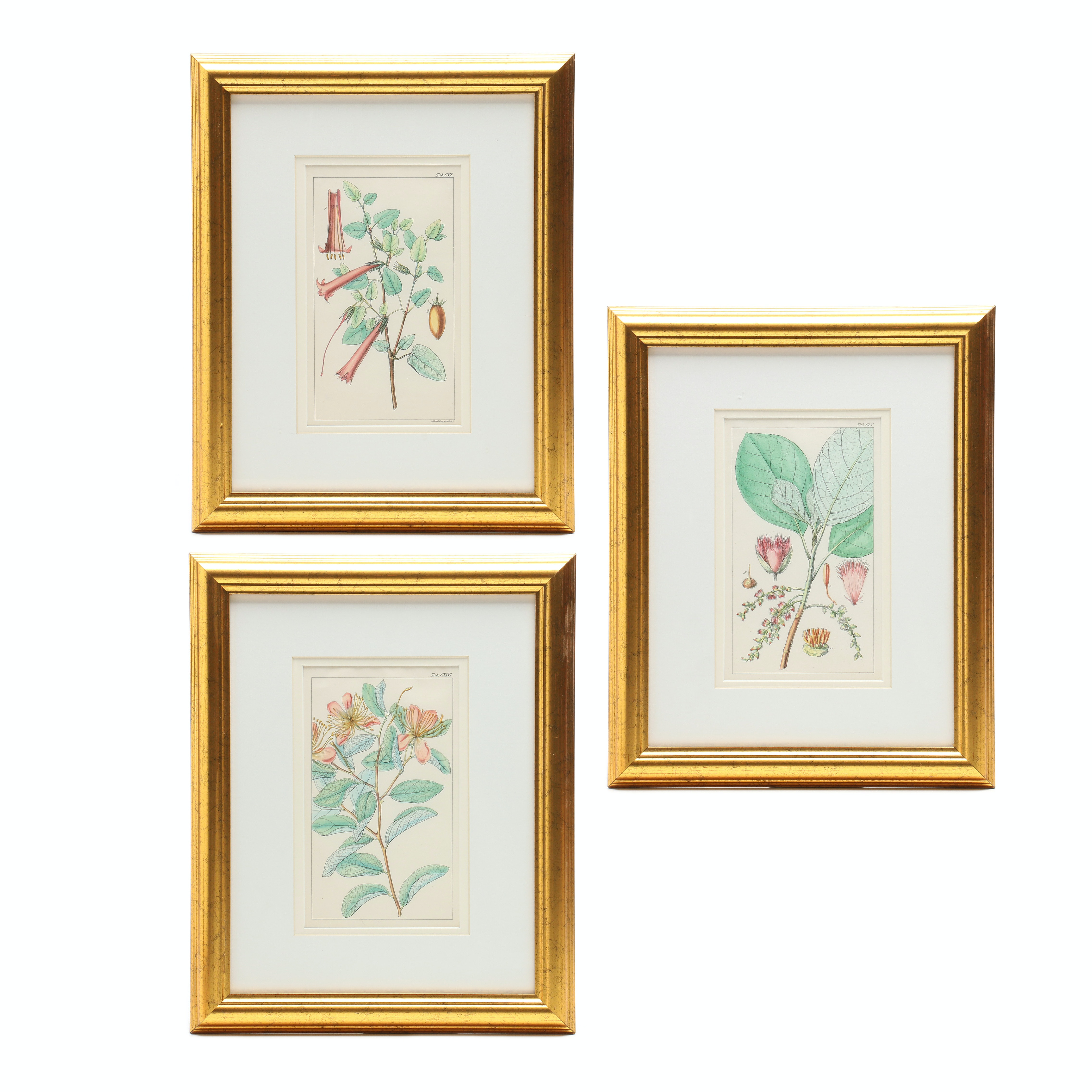 Three Hand-Colored Lithographs After Antique Botanical Prints