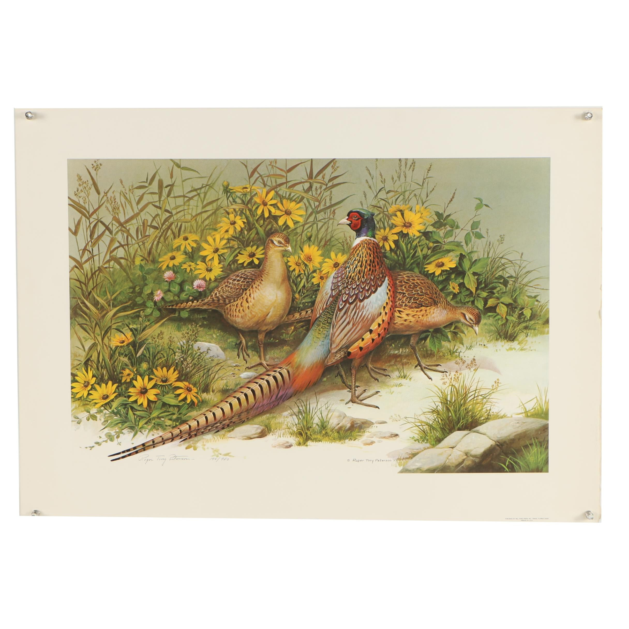"""Roger Tory Peterson Limited Edition Offset Lithograph """"Ring-Necked Pheasant"""""""