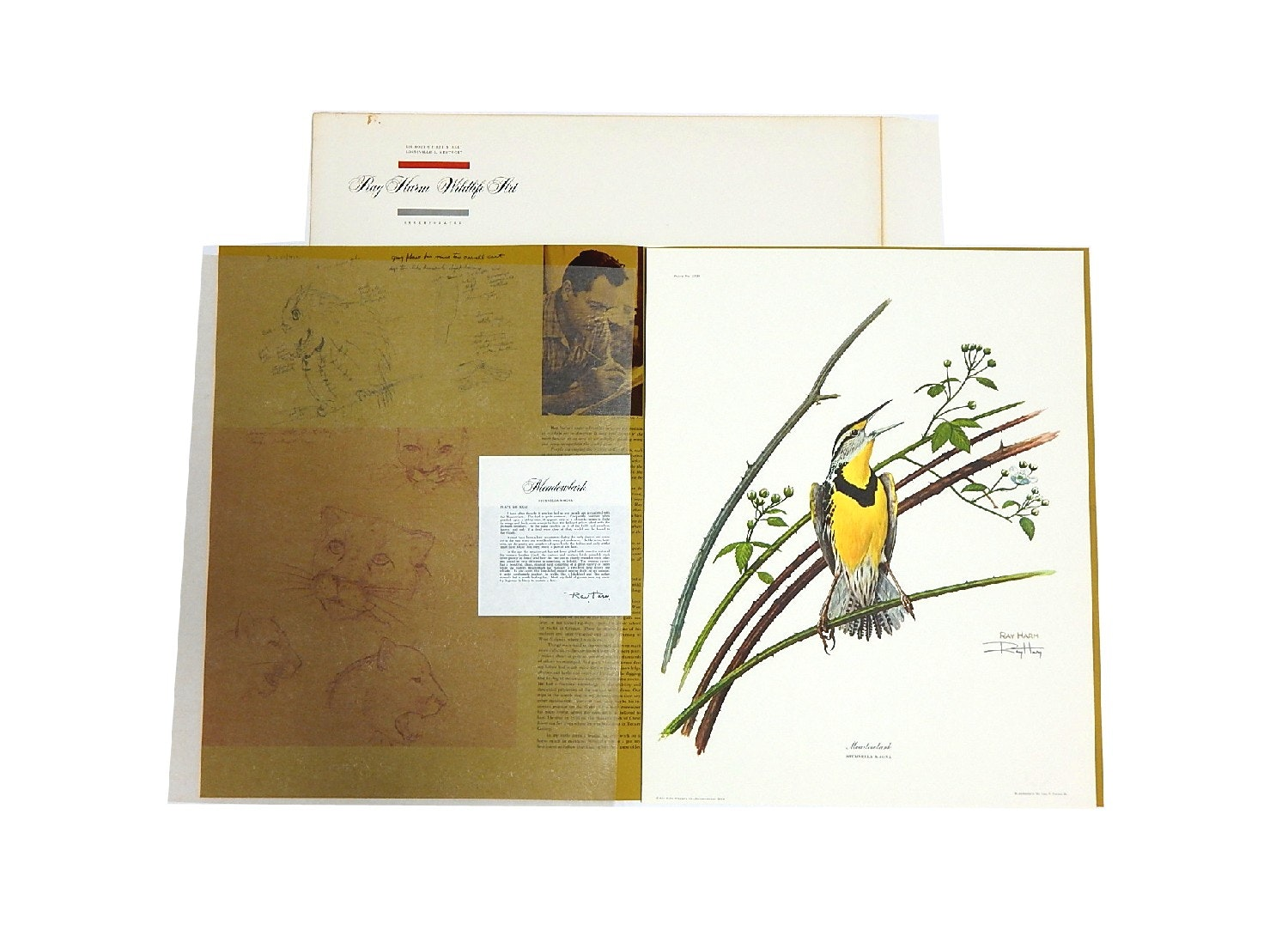 """1960s Ray Harm Signed Offset Lithograph """"Meadowlark"""""""