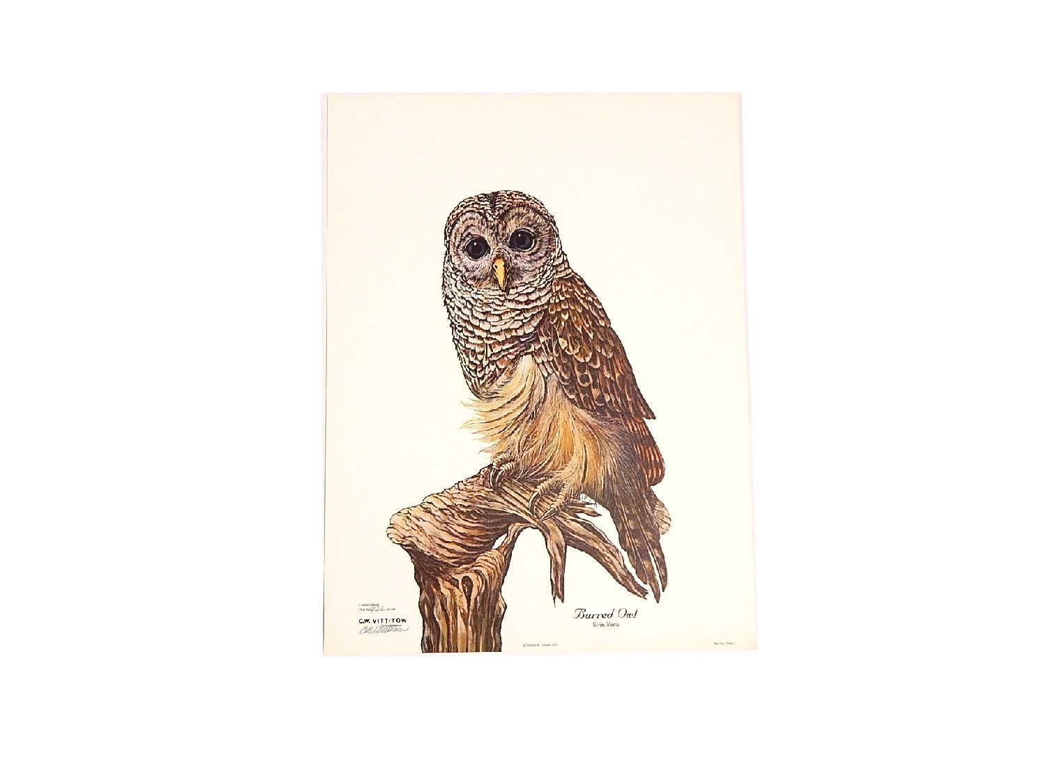 """Unframed 1979 C.W. Vittitow """"Barred Owl"""" Signed Limited Lithograph Print"""