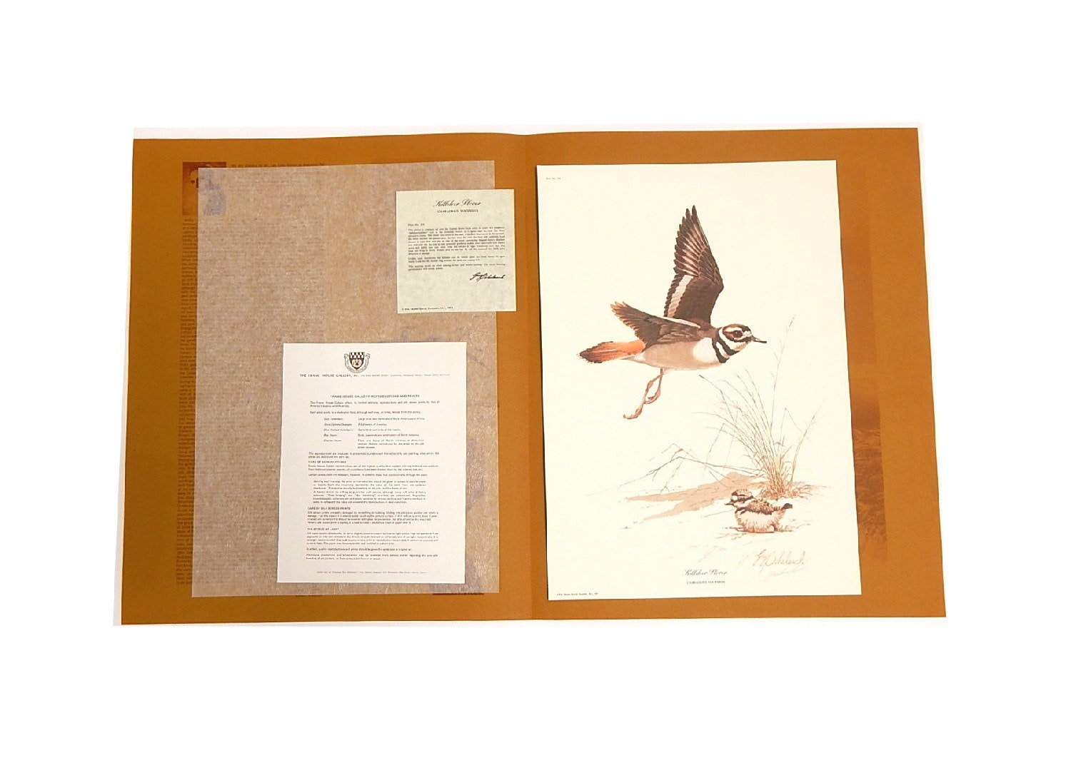 """Signed """"Killdeer Plover"""" Lithograph by Guy Coheleach with COA"""