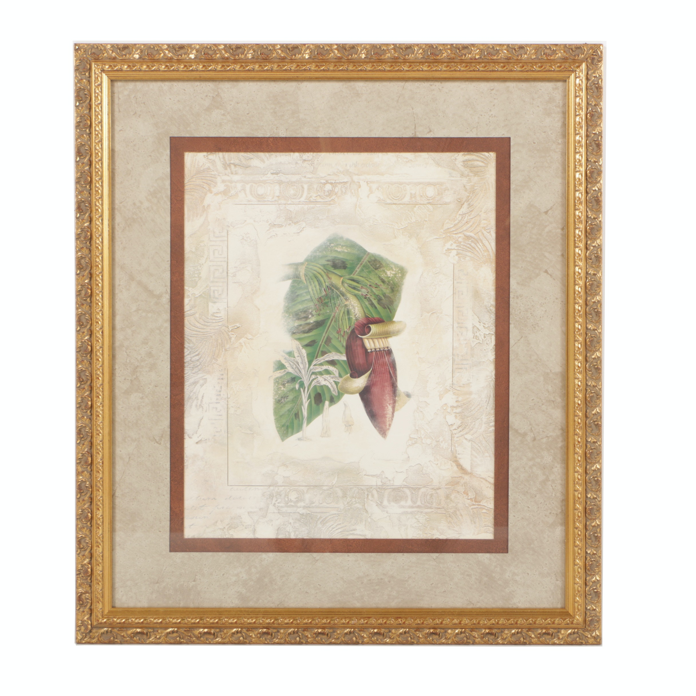 Botanical Print of Banana Blossom