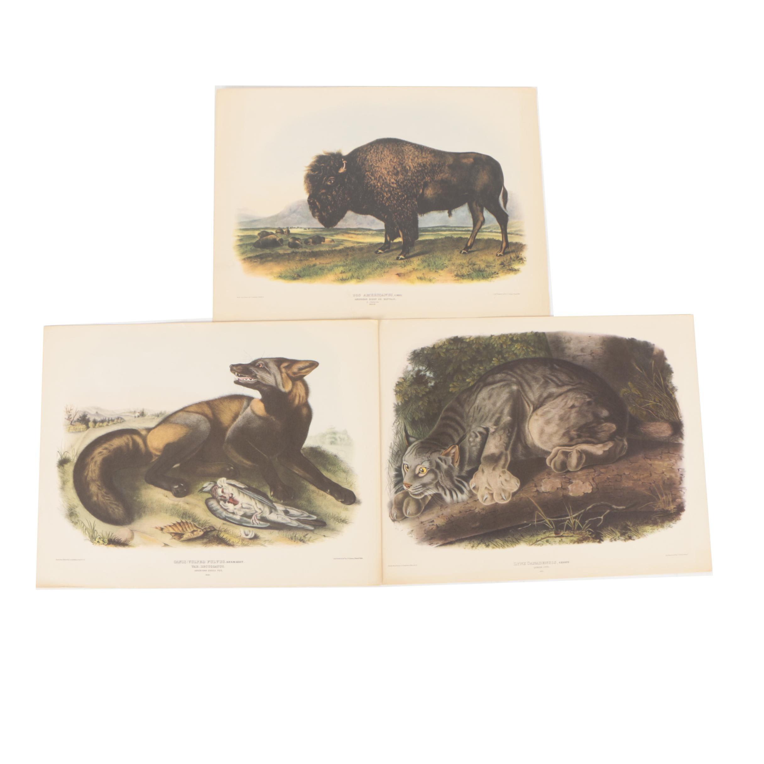 Three Vintage Offset Lithographs After John James Audubon