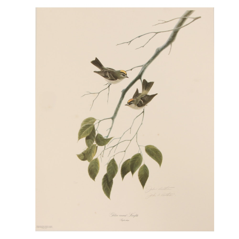 "John Ruthven Limited Edition Offset Lithograph ""Golden-crowned Kinglets"""