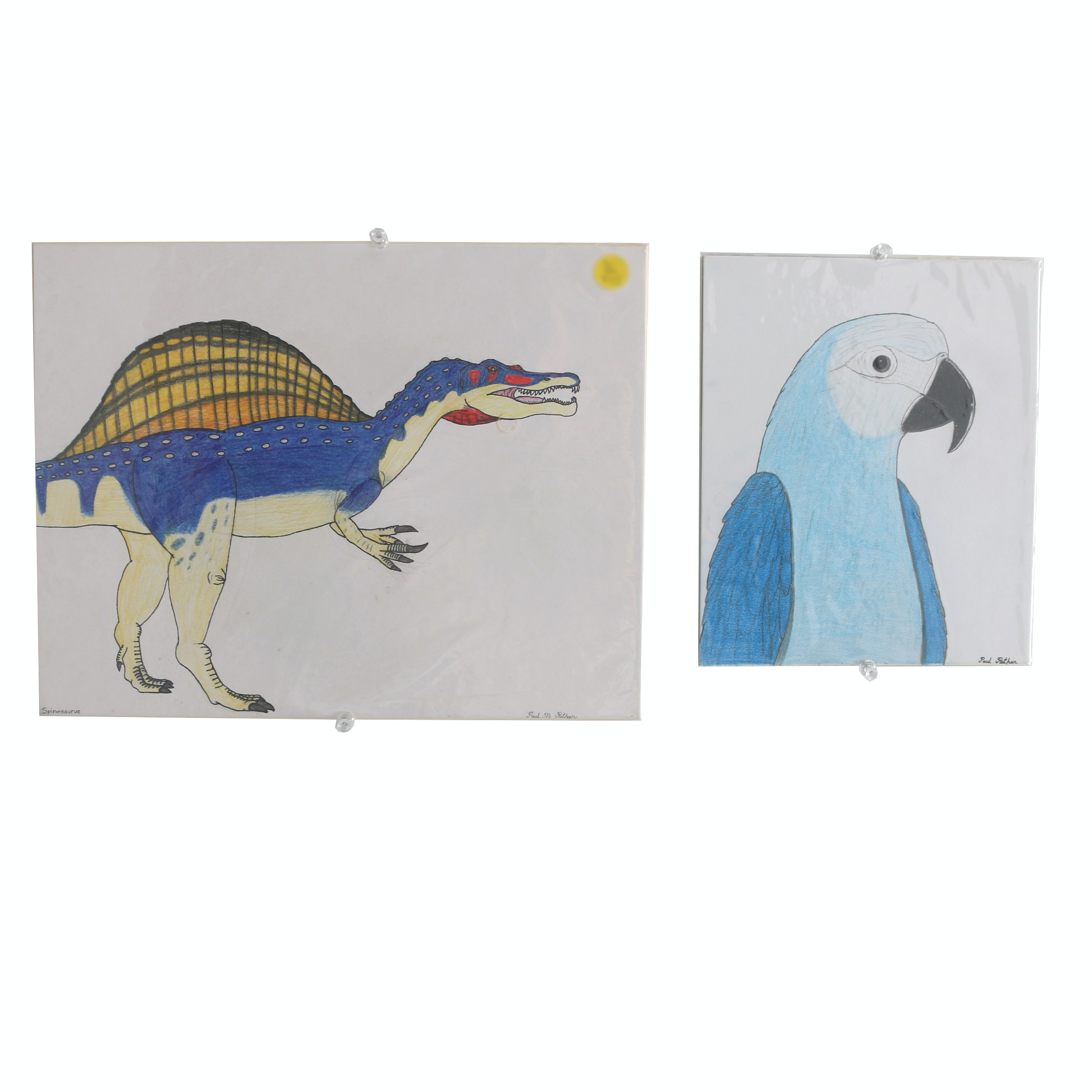 "Pair of Paul Rothan Drawings on Mat Boards ""Spinosaurus"" and ""Spix's Macaw"""