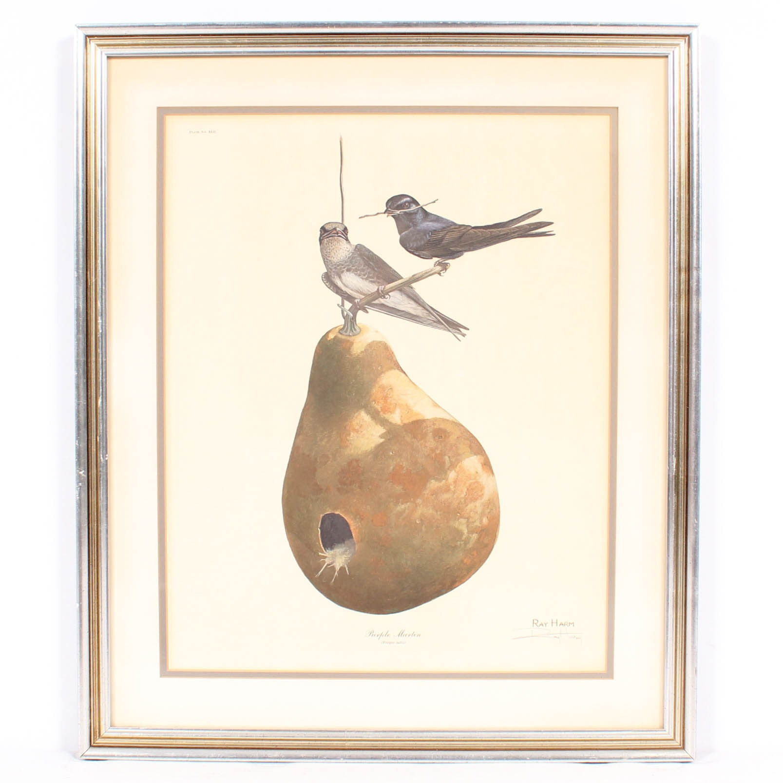 """Ray Harm Signed Offset Lithograph """"Purple Martin"""""""