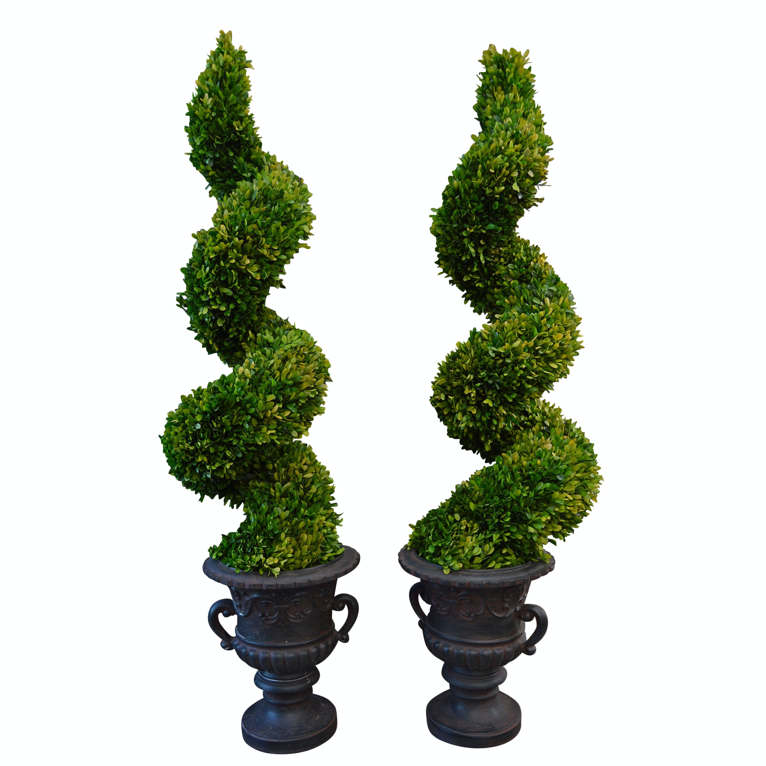 Pair of Large Preserved Genuine Boxwood Spiral Topiaries from Uttermost