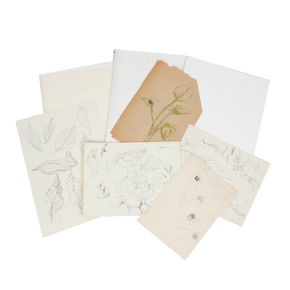 """June Carver Roberts Archive of Works Featuring """"Season of Promises"""" Studies"""
