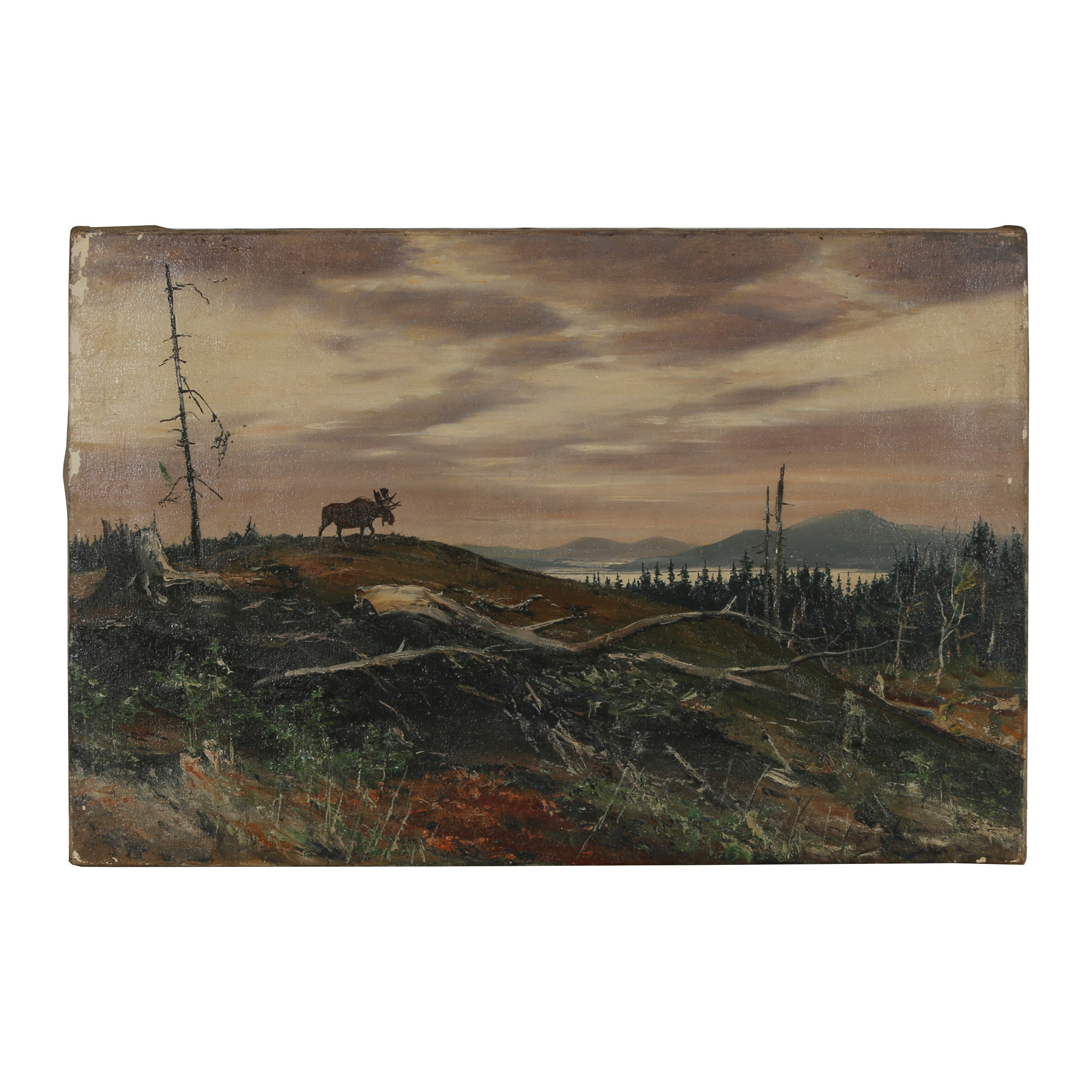 "Early 20th Century Oil Painting ""Moose on the Hill"""