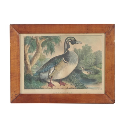 "Currier and Ives Water Fowl Color Lithograph ""Wood-Duck"""