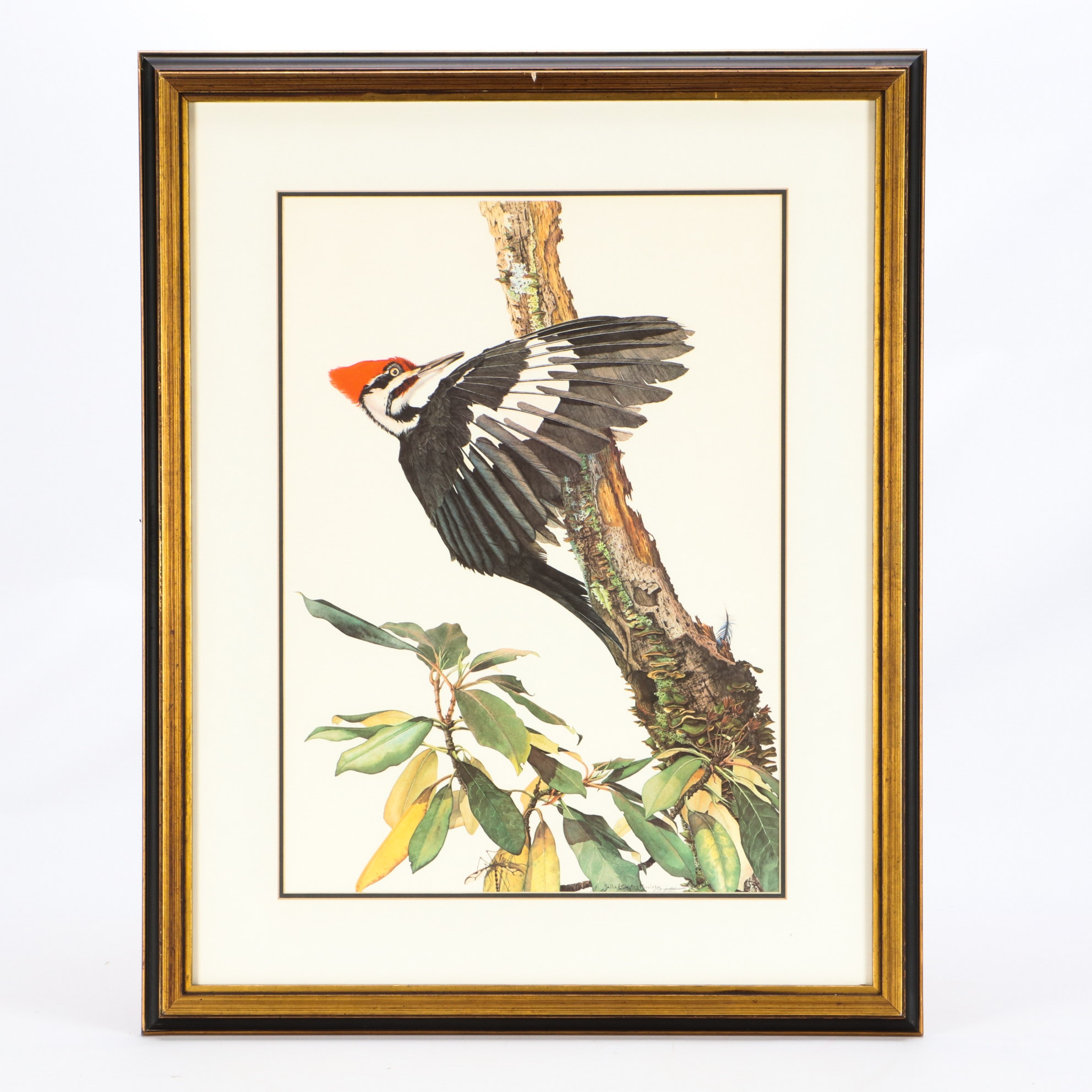 """Sallie Elligton Middleton Offset Lithograph """"Pileated Woodpecker"""""""