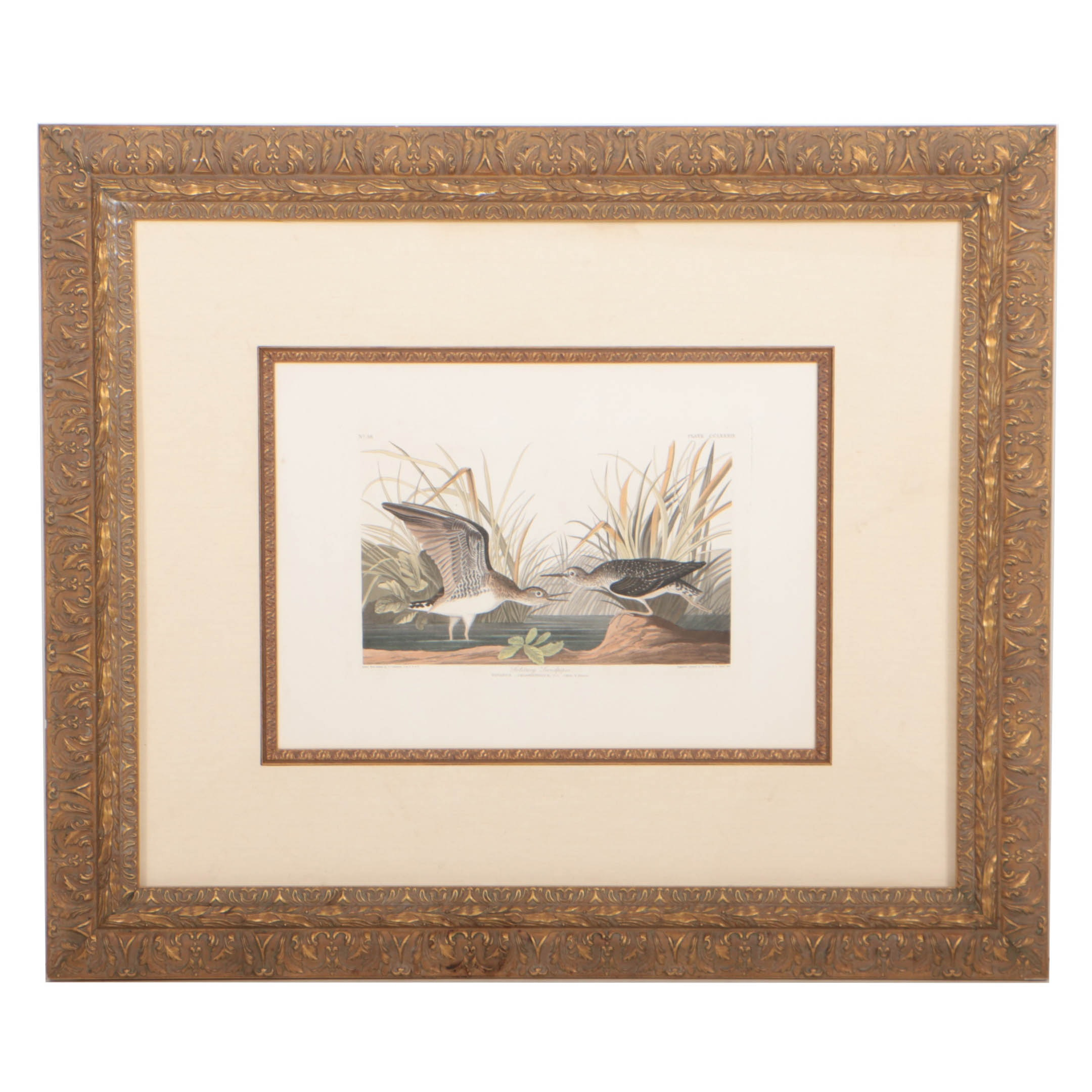 """R. Havell Engraving and Aquatint After J.J. Audubon's """"Solitary Sandpiper"""""""
