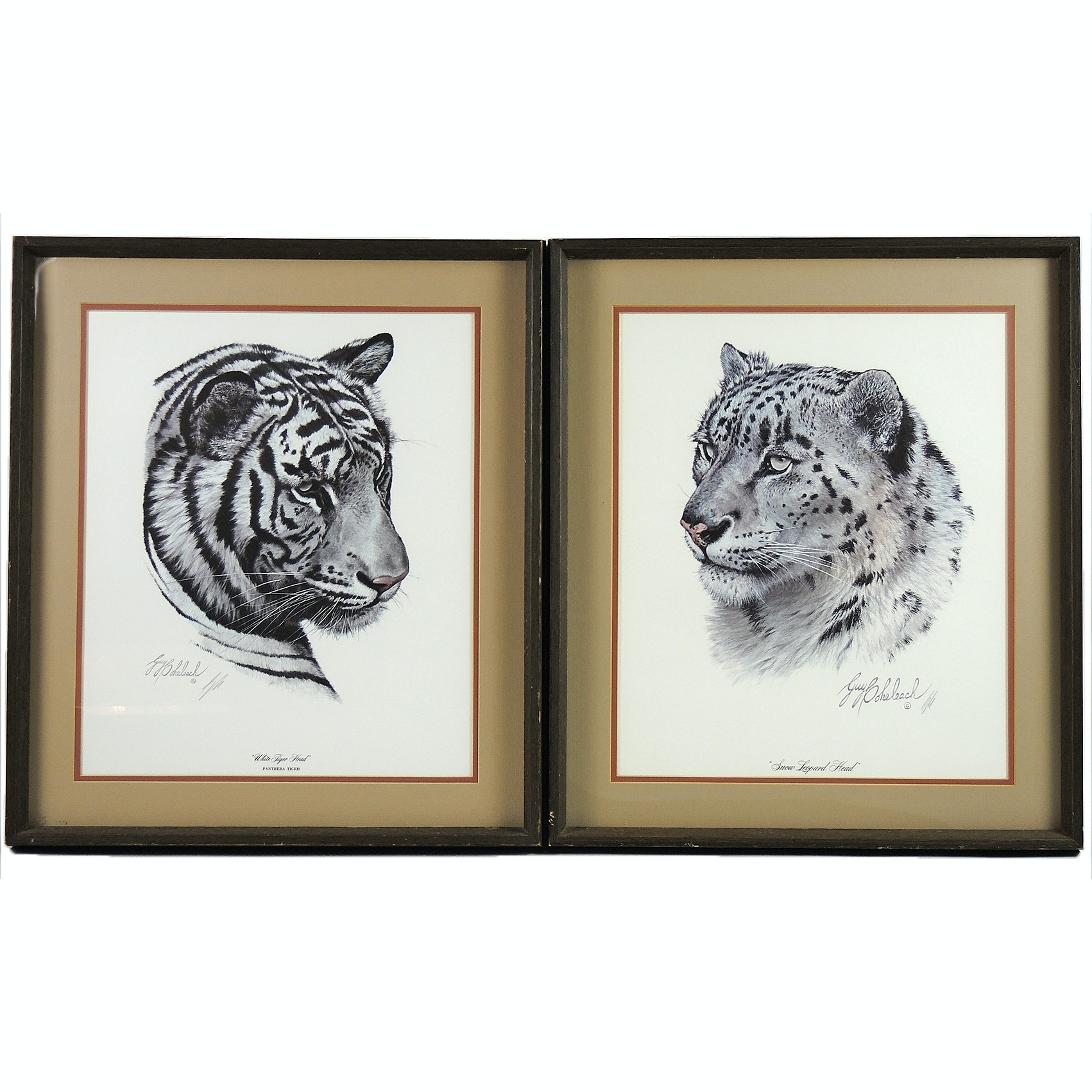 Wildlife Signed Offset Lithographs by Guy Coheleach