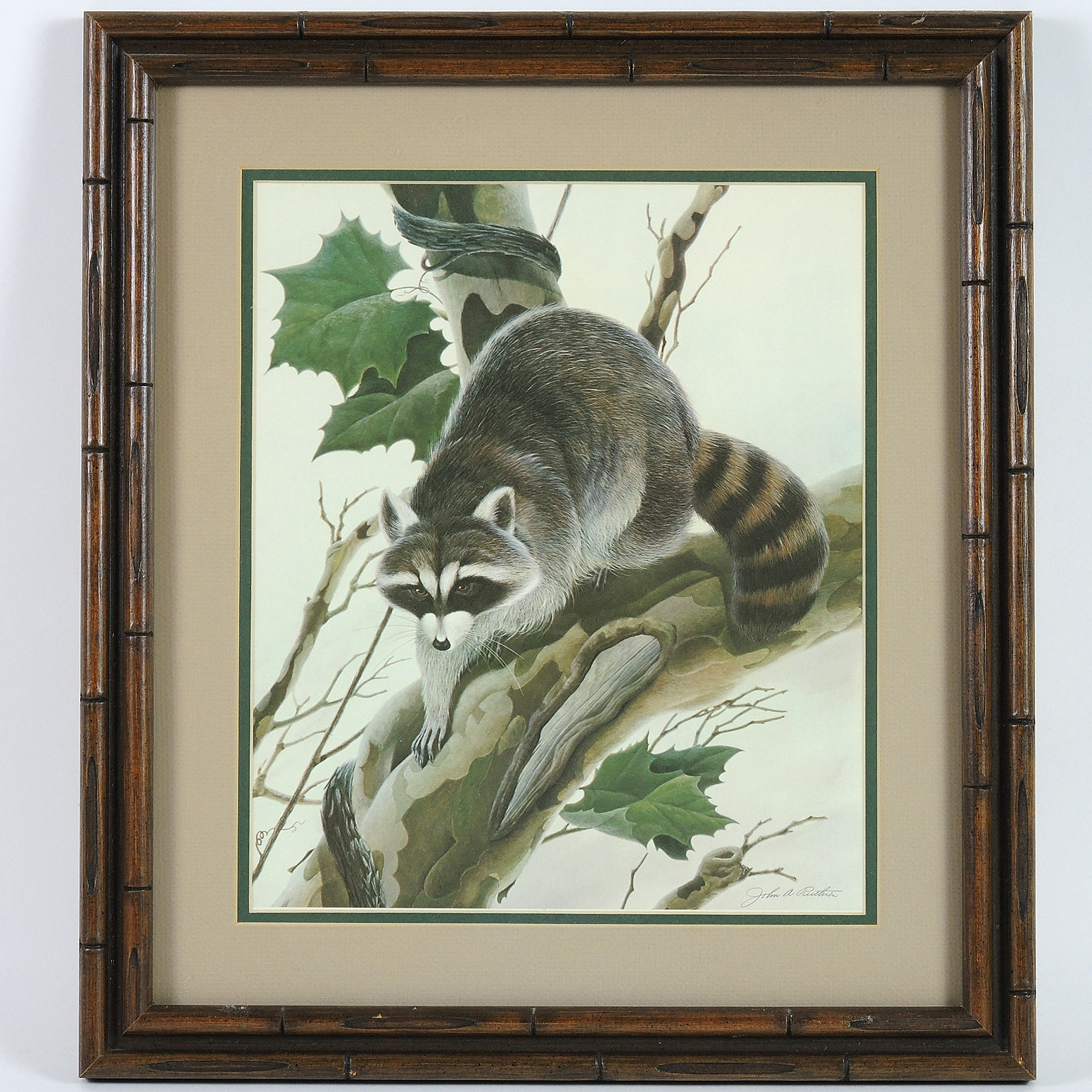 """Offset Lithographic Reproduction after John Ruthven """"Raccoon"""""""