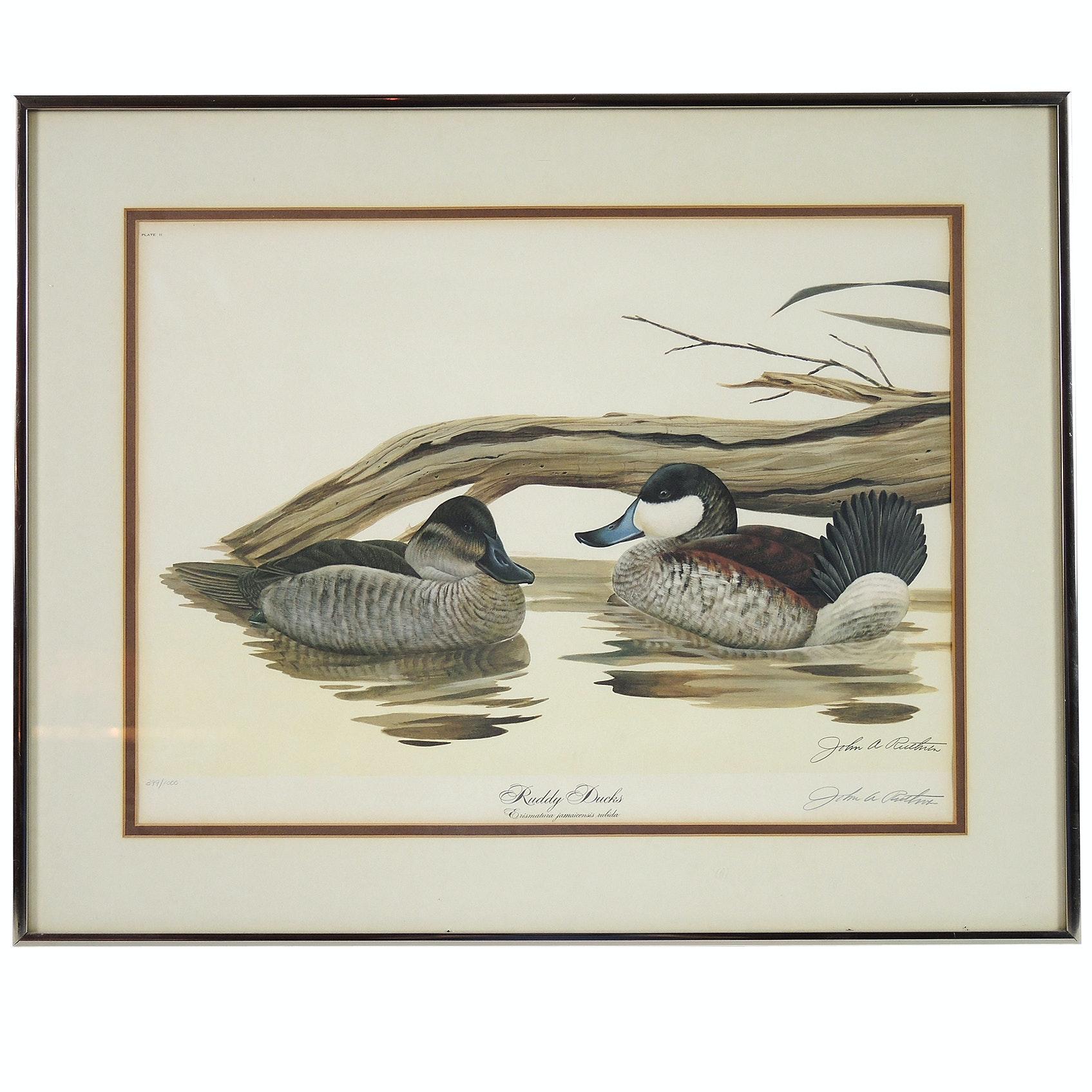 "John A. Ruthven Limited Edition Offset Lithograph ""Ruddy Duck"""