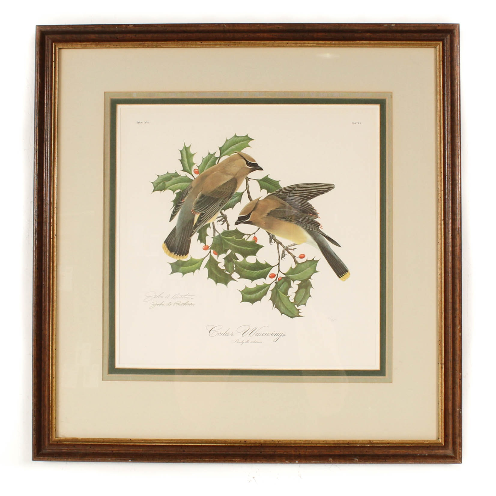 """John Ruthven Signed Limited Edition Offset Lithograph """"Cedar Waxwings"""""""