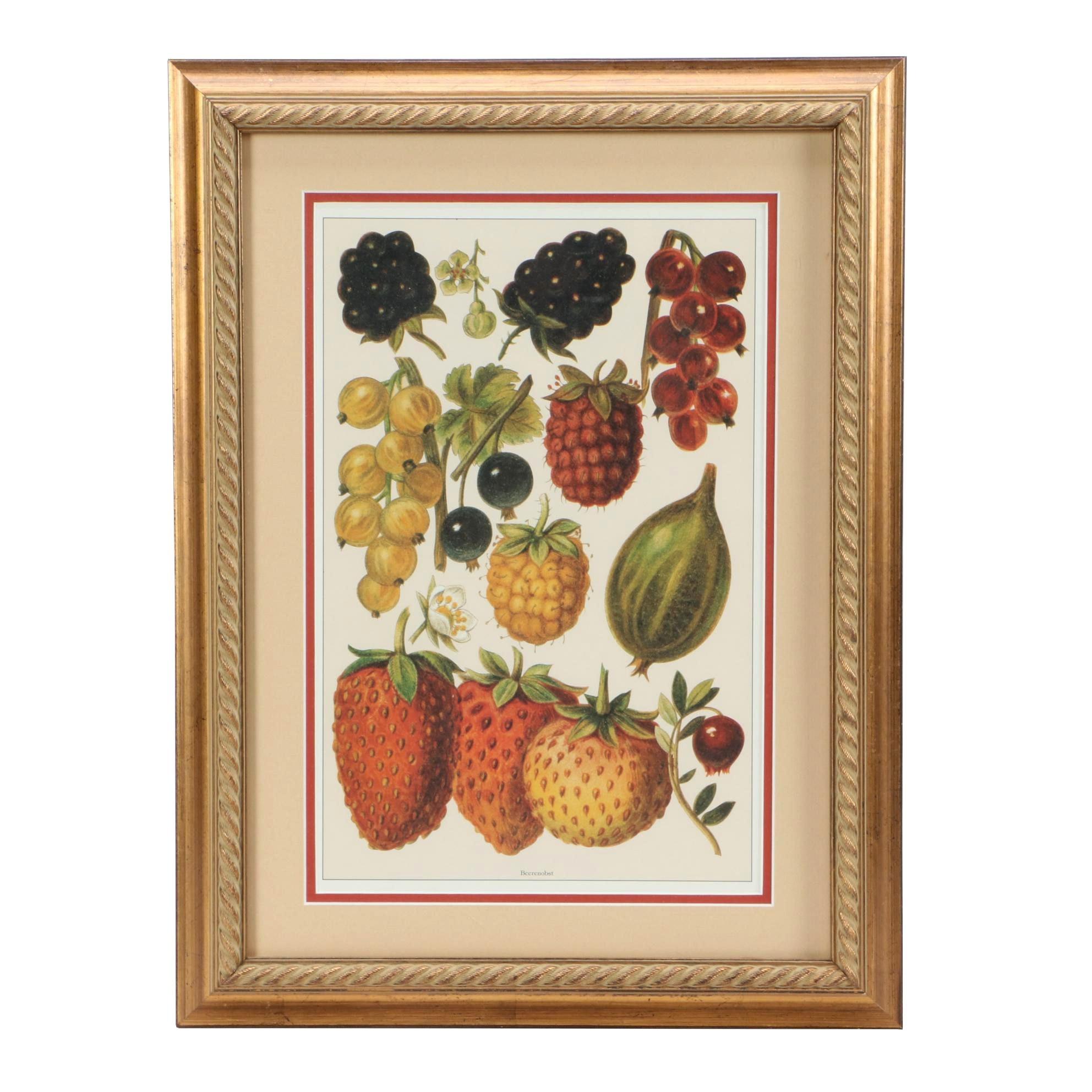 """Offset Lithograph of Vintage Botanical Illustration """"Beerenobst"""""""