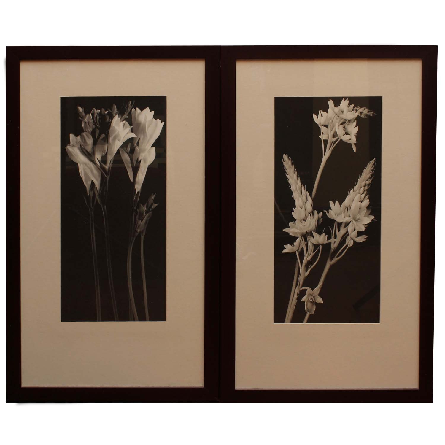 Two New Century Black and White Flower Photographs