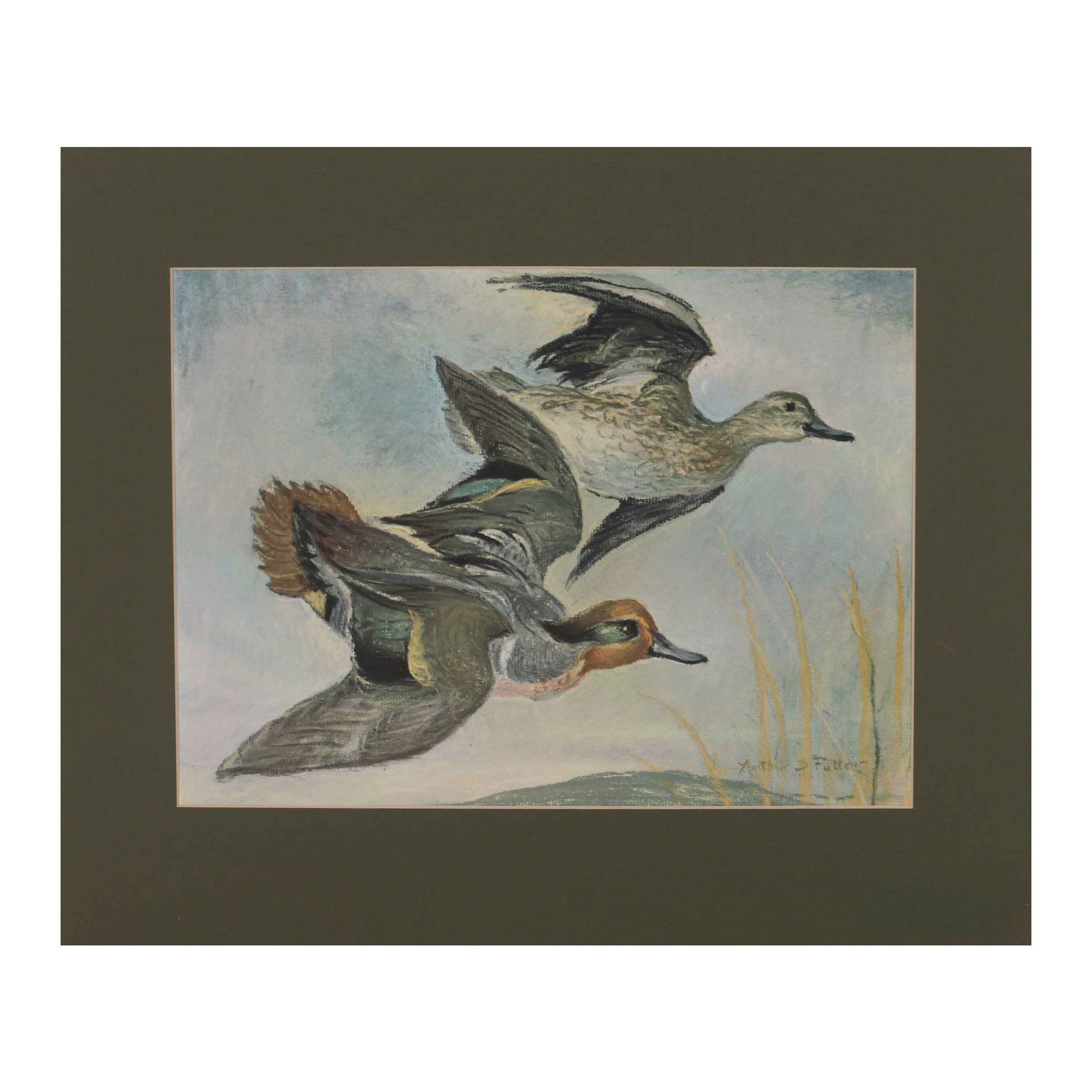 """Offset Lithograph after Arthur D. Fuller """"Green-winged Teal in Flight"""""""