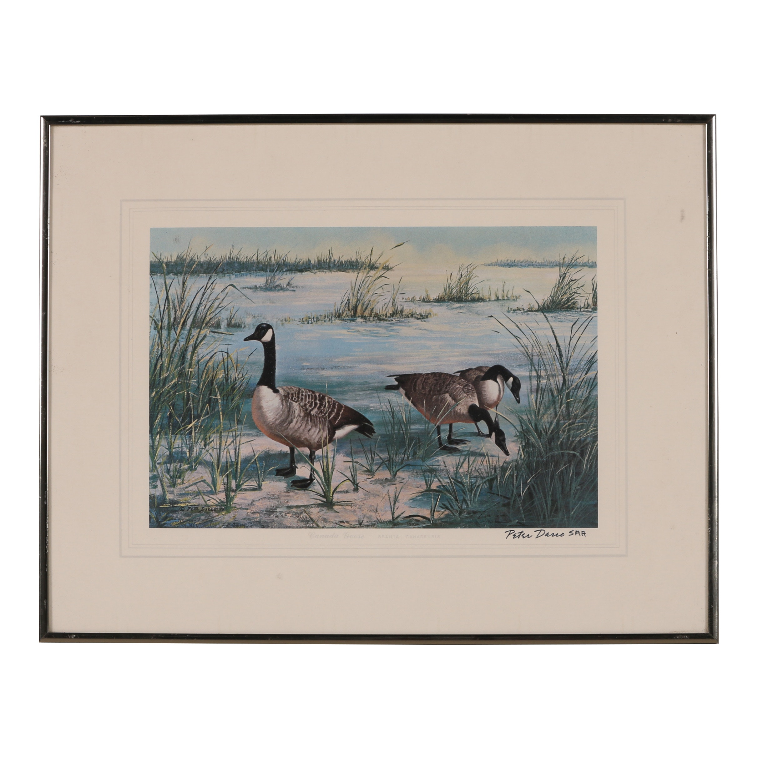 """Peter Darro Offset Lithograph """"Canada Geese"""""""