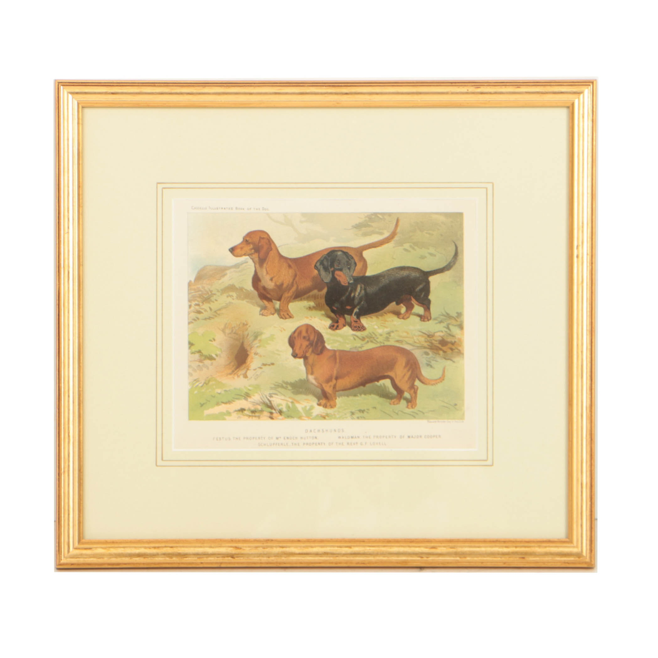 "19th Century Chromolithograph from Cassells ""The Illustrated Book of the Dog"""