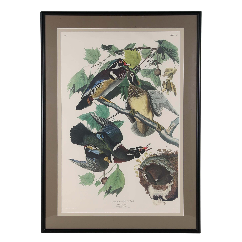 "Offset Lithograph after Robert Havell Jr. ""Summer or Wood Duck"""
