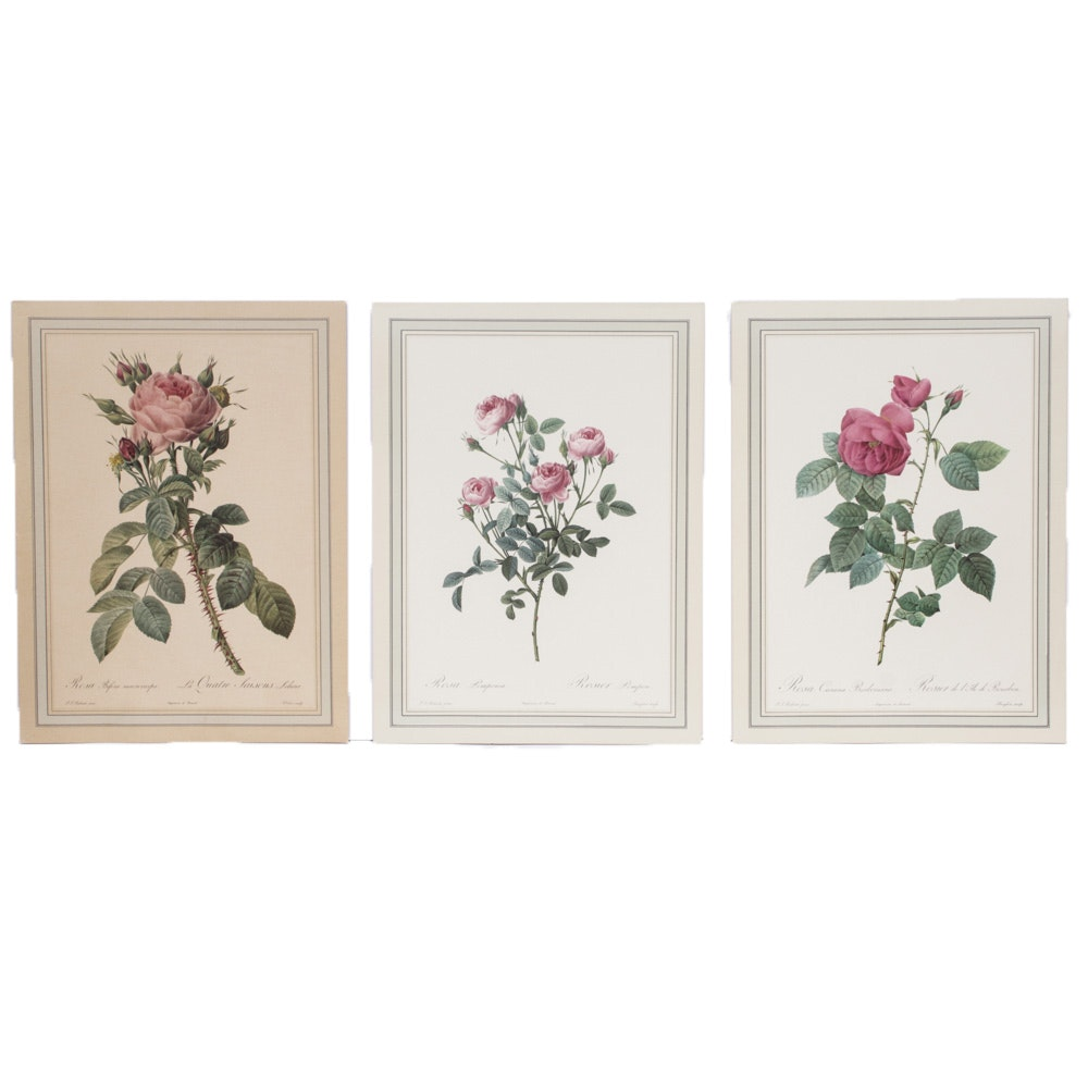 Offset Lithographs after Engravings of Rose Paintings by Redouté