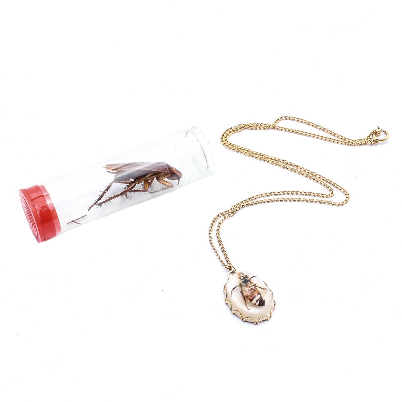 Bee in Resin Pendant Necklace and Large Cockroach Specimen