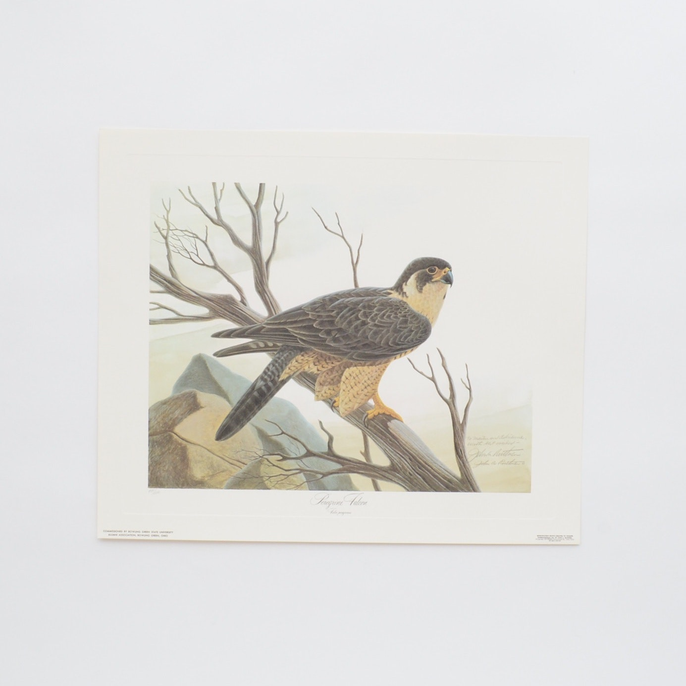 "Personalized John Ruthven Offset Lithograph ""Peregrine Falcon"""