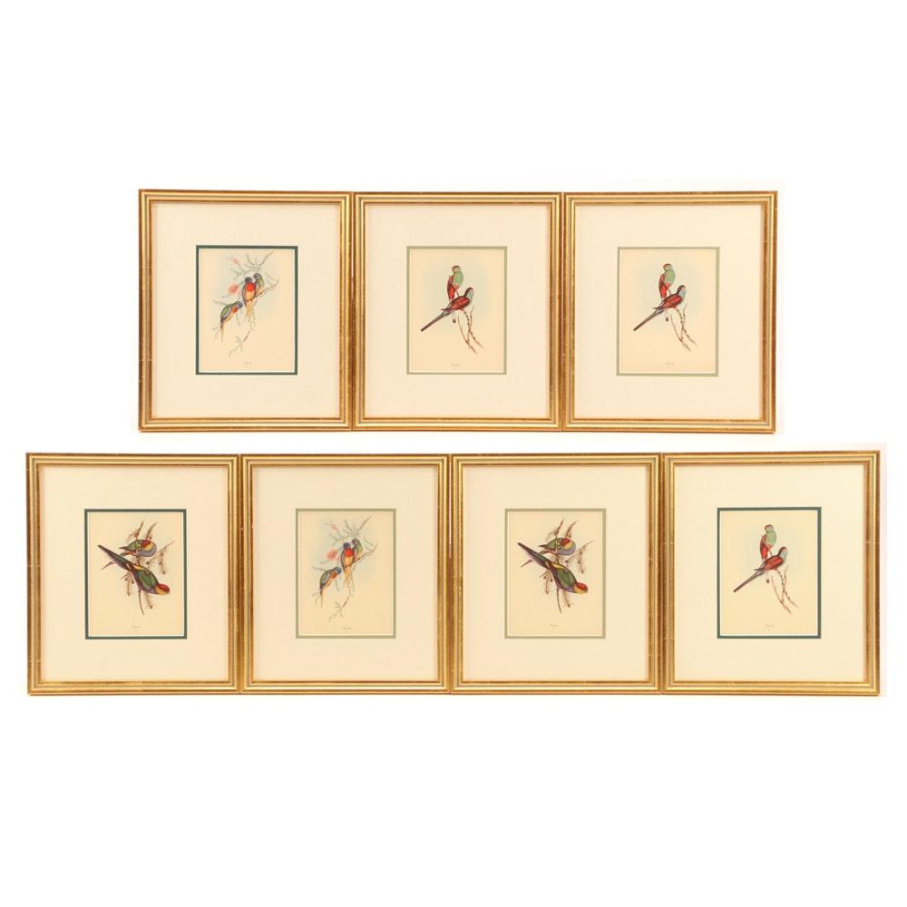 Offset Lithographs after John Gould Lithographs of Parrots