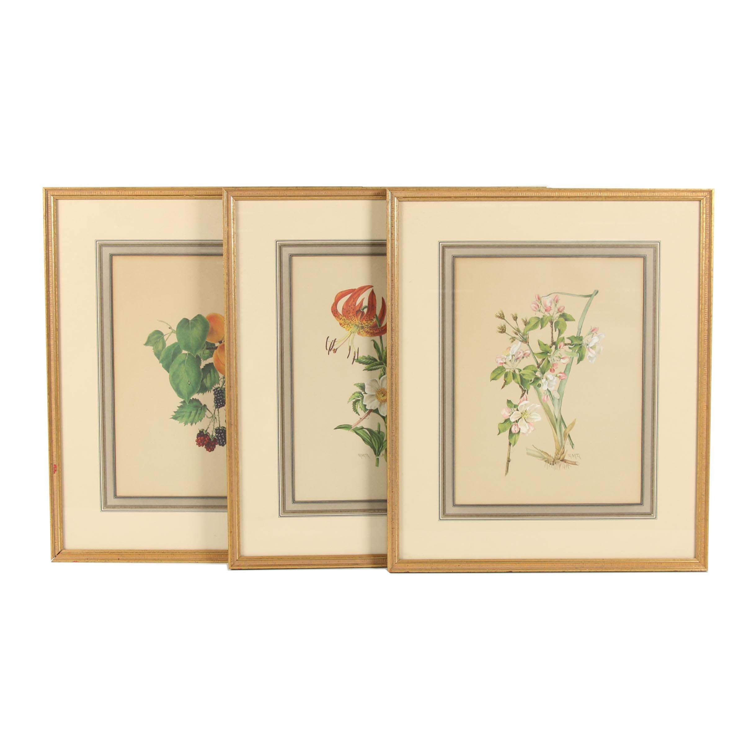 Offset Lithographs after R. M. T.