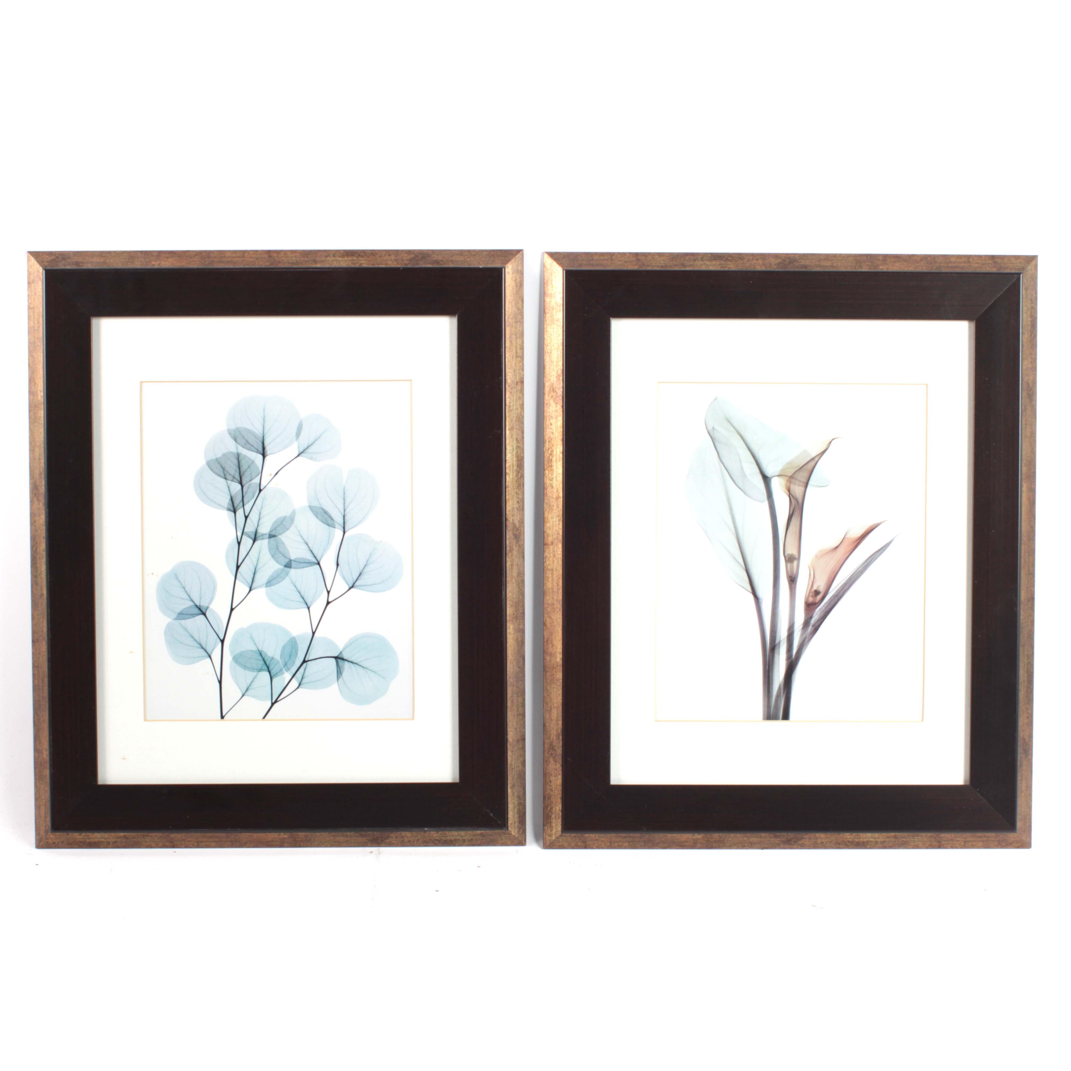 Botanical Offset Lithographs