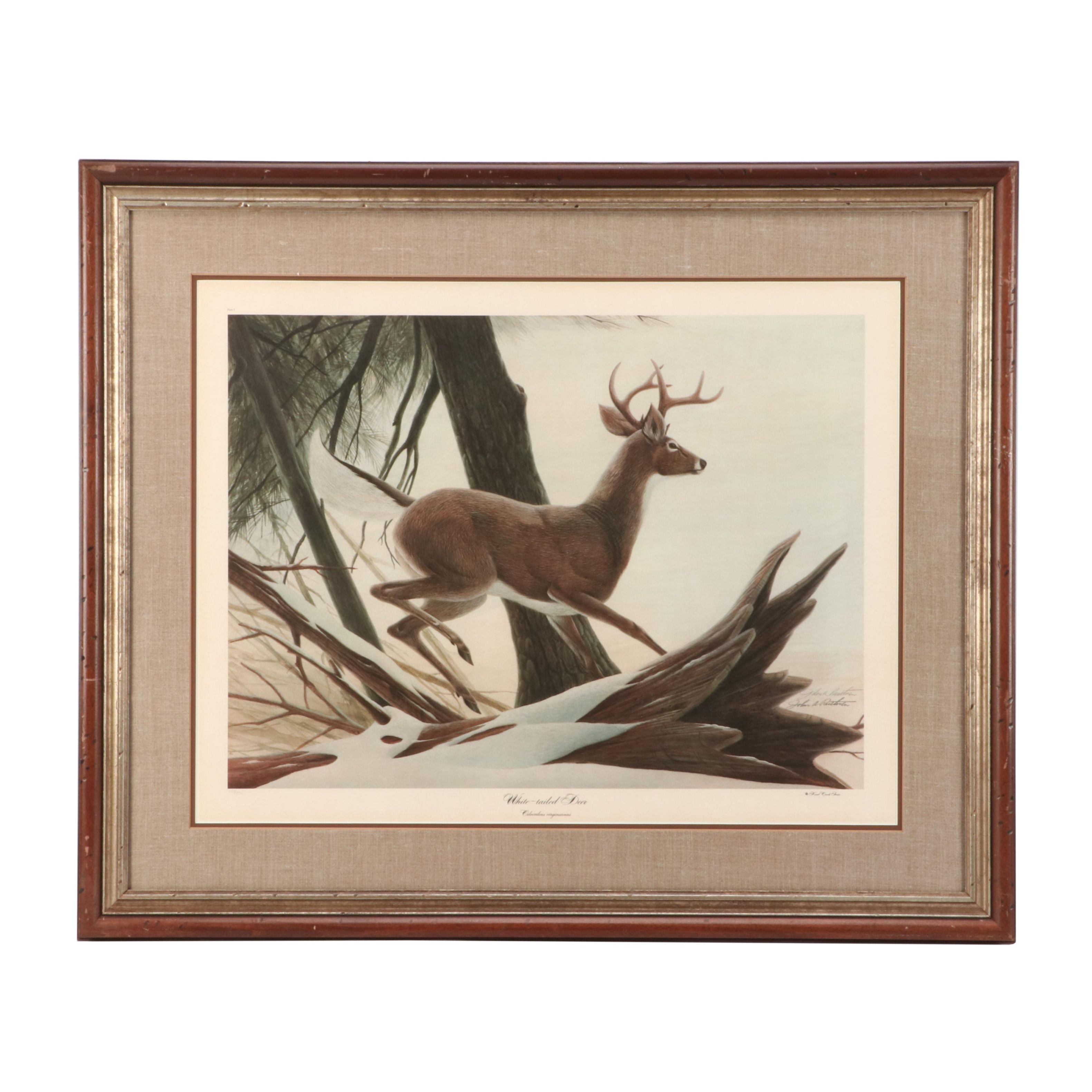 """John Ruthven Limited Edition Offset Lithograph """"White-tailed Deer"""""""