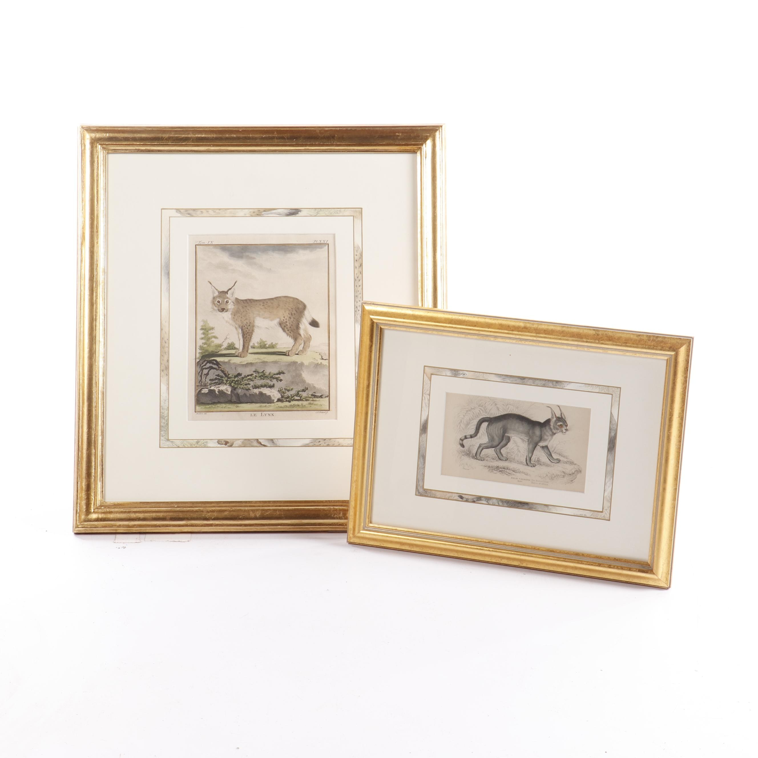 """Engravings from """"The Naturalist's Library"""" and Buffon's """"Histoire Naturelle"""""""