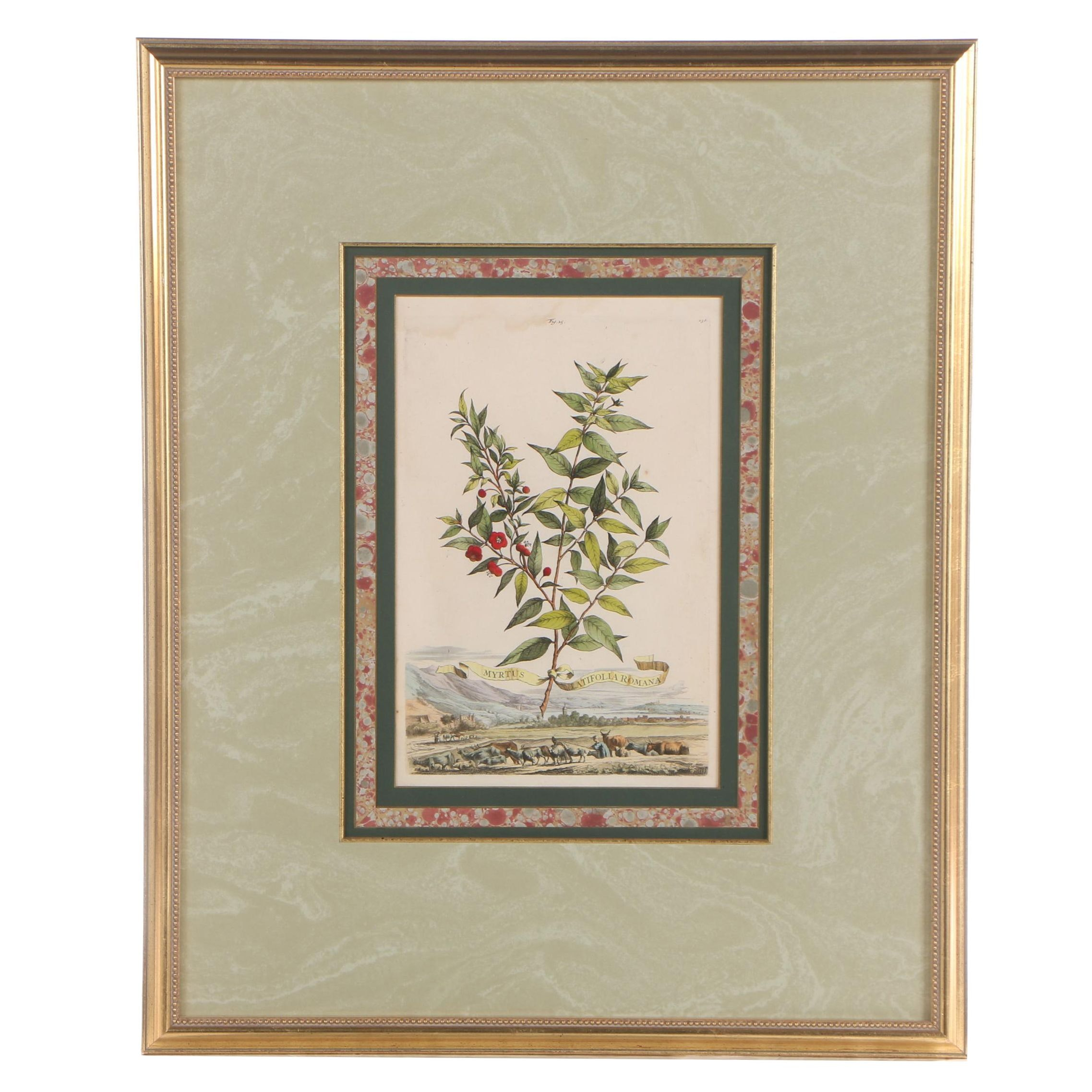"""Hand-Colored Engraving after Abraham Munting """"Myrtus"""""""