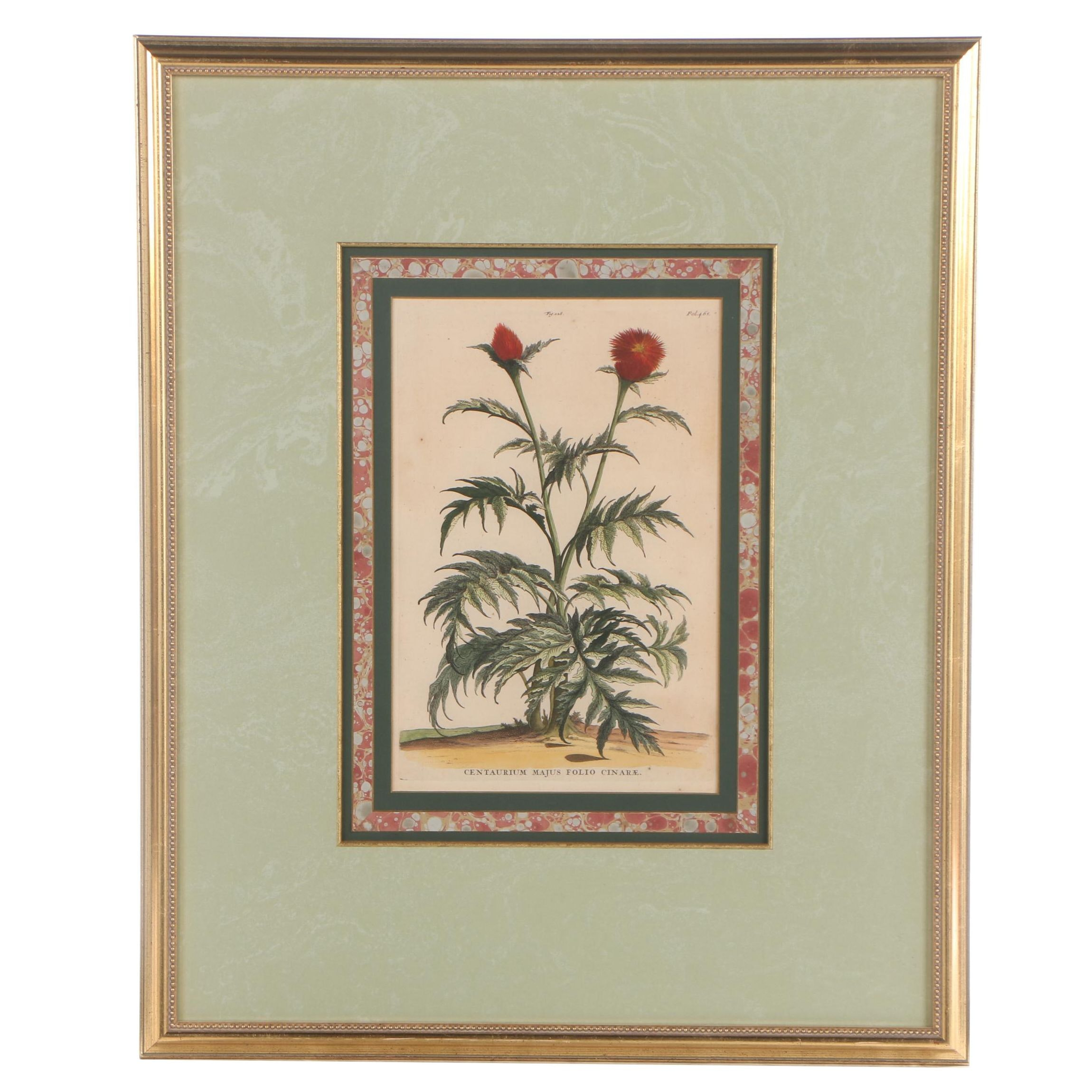 """Hand-Colored Engraving after Abraham Munting """"Centaurium"""""""