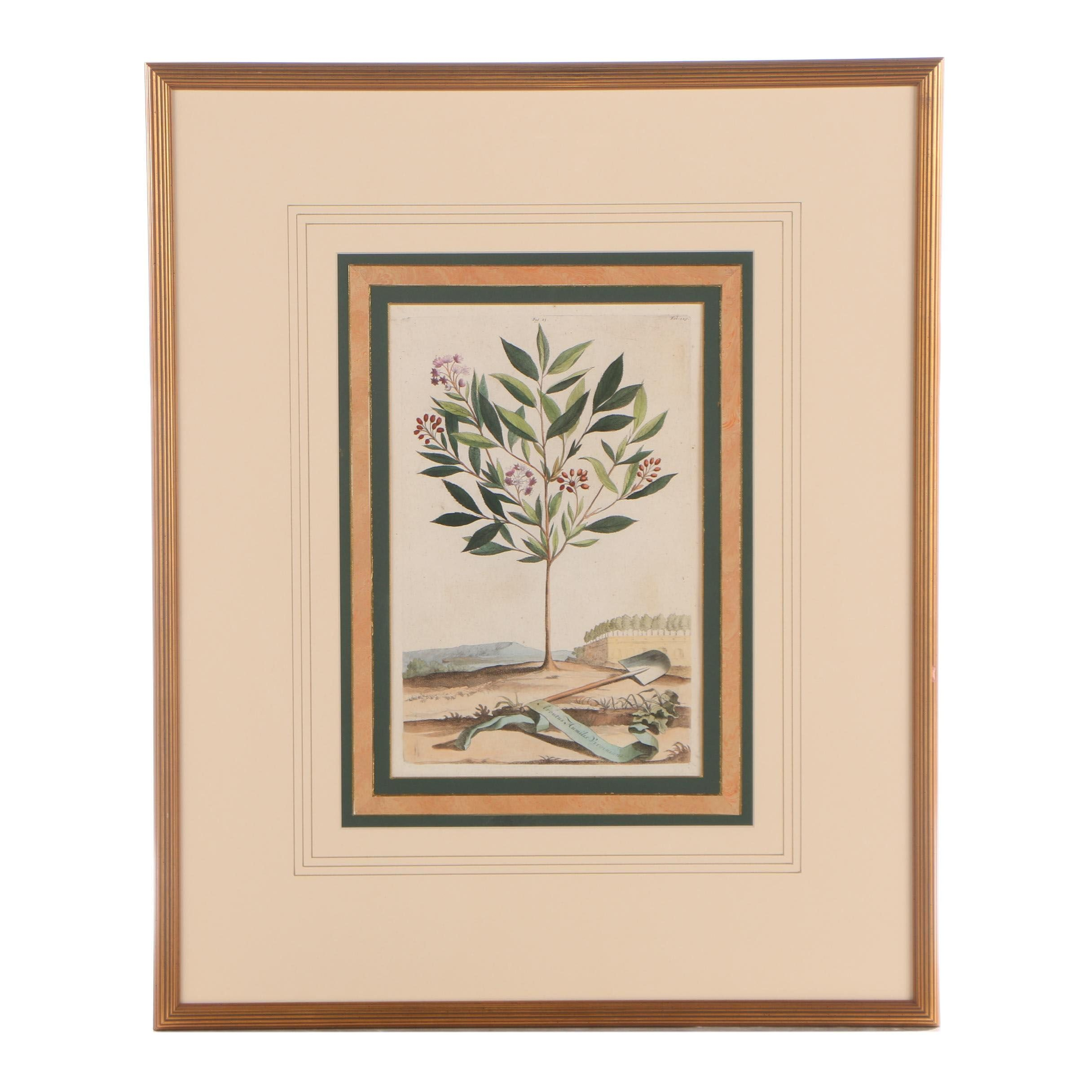 """Hand-Colored Engraving after Abraham Munting """"Arbutus"""""""